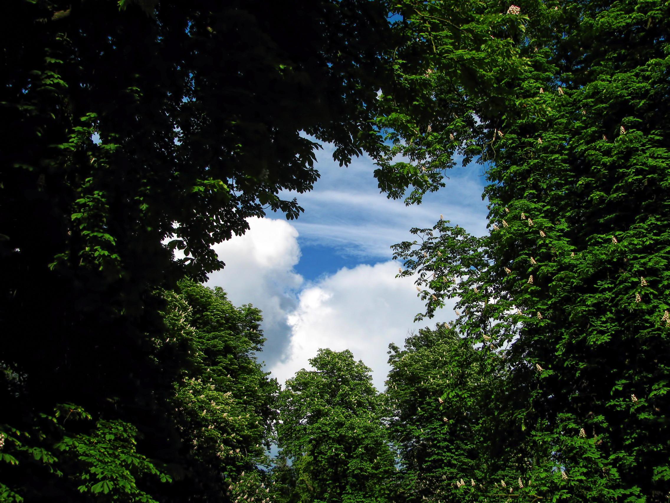 Free Images Tree Nature Sky Sunlight Leaf Window