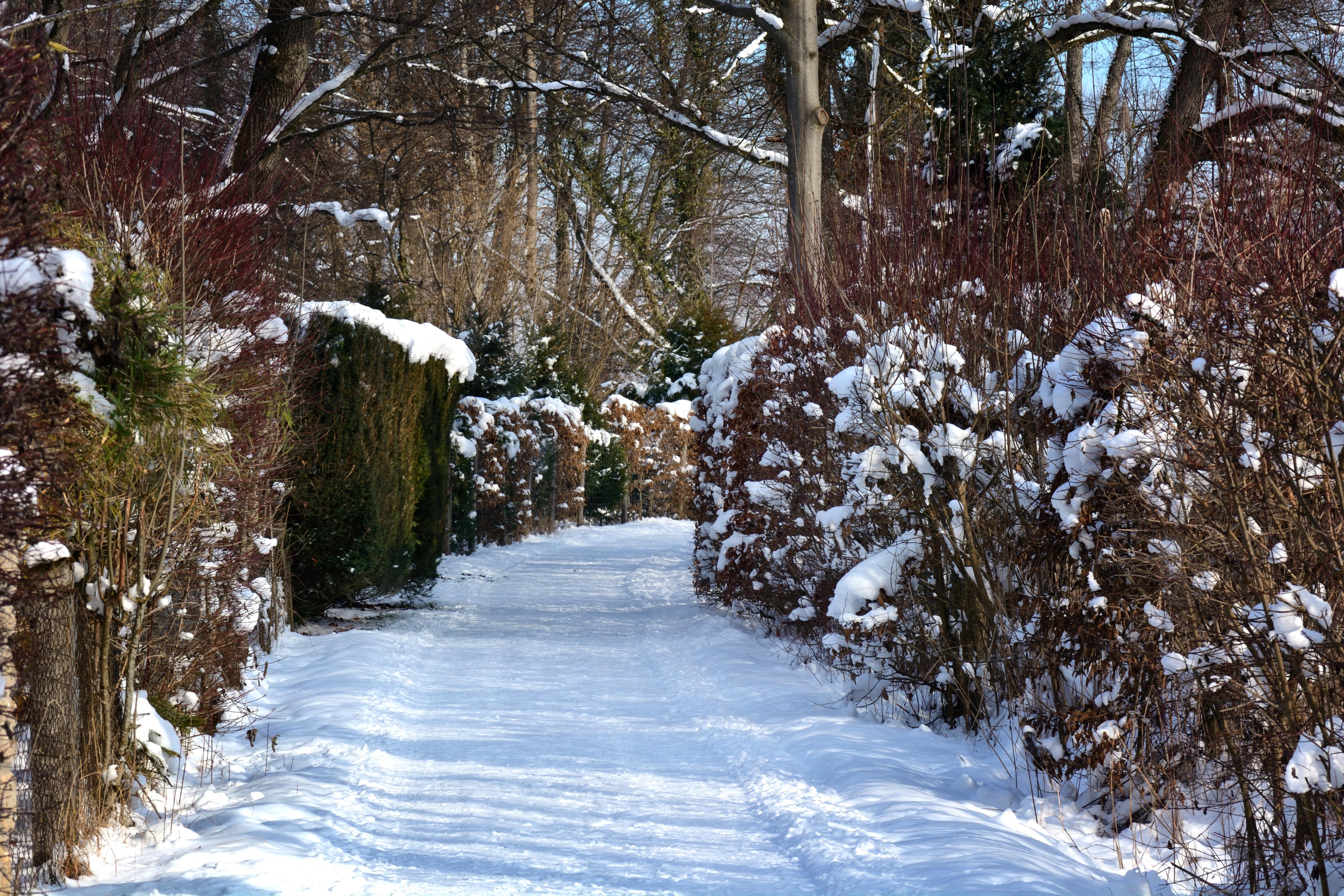 картинка деревья и кусты зимой продюсер