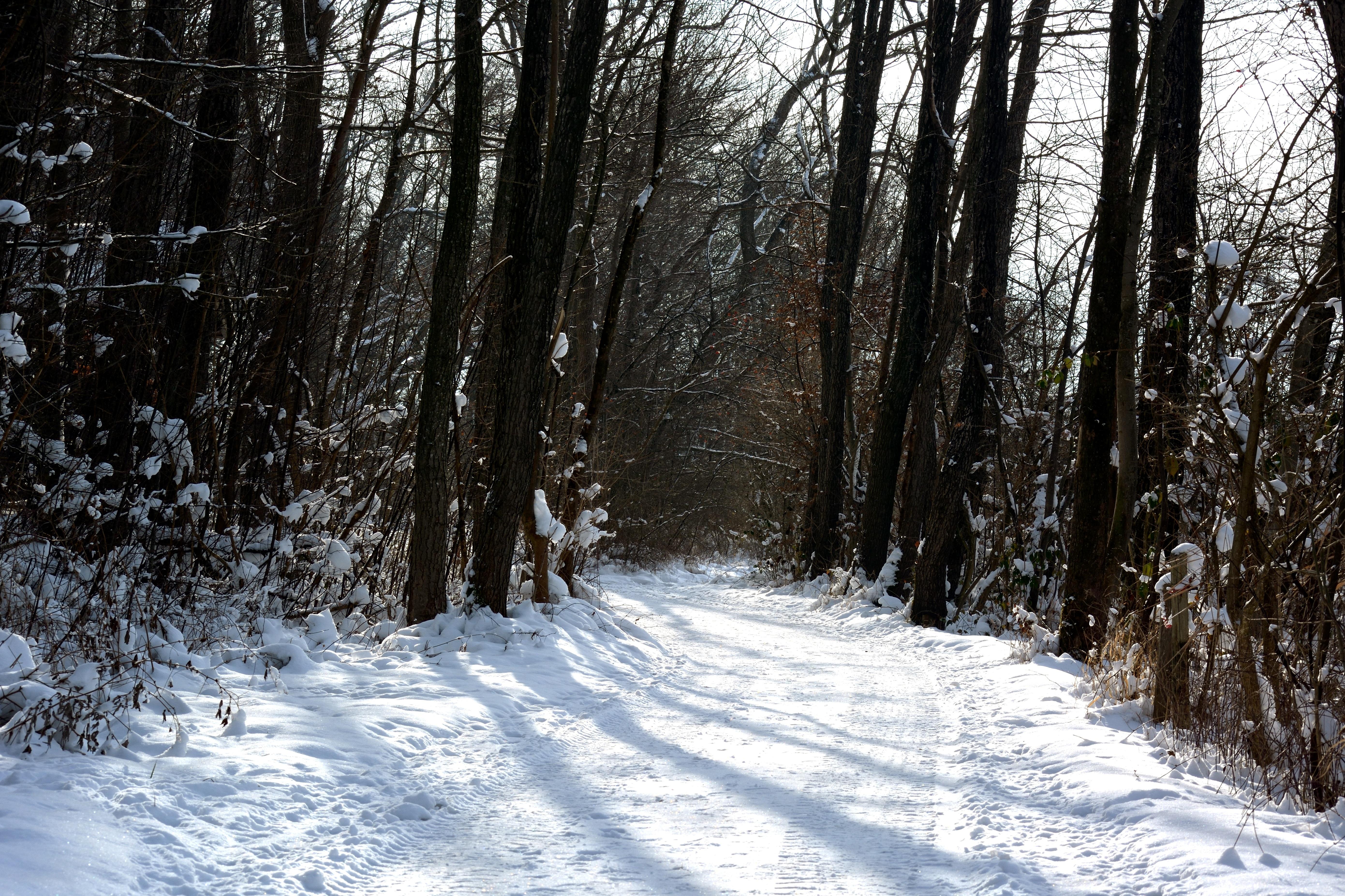 Fotos Gratis Arbol Naturaleza Bosque Nieve Frio Luz De Sol Clima Nevado Temporada Arboles Arbustos Calzado Habitat Lejos Invernal Bosque De Invierno Congelacion Entorno Natural Planta Lenosa 5562x3708 660301 Imagenes Gratis