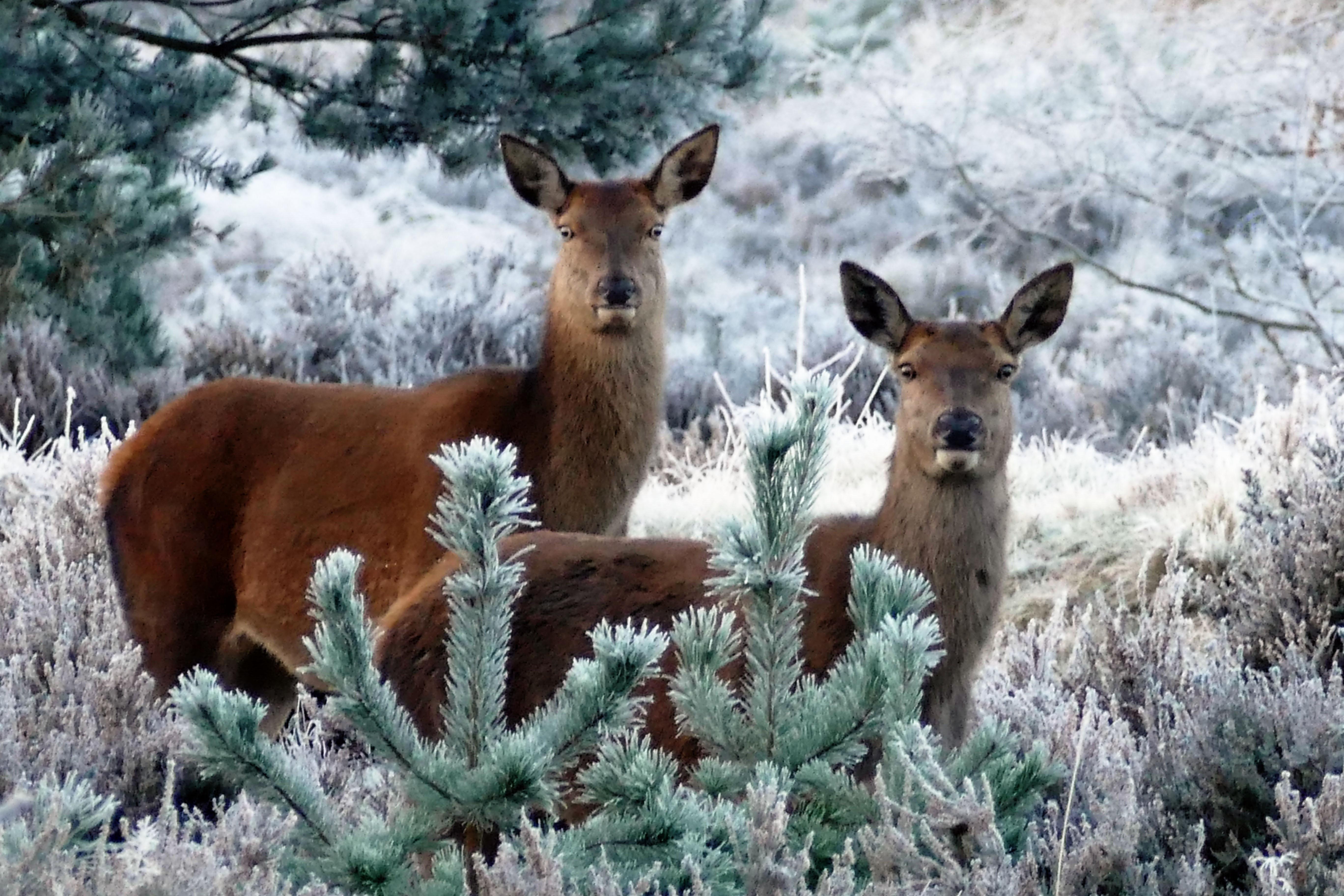 Fotos gratis : árbol, naturaleza, bosque, invierno, linda, fauna ...