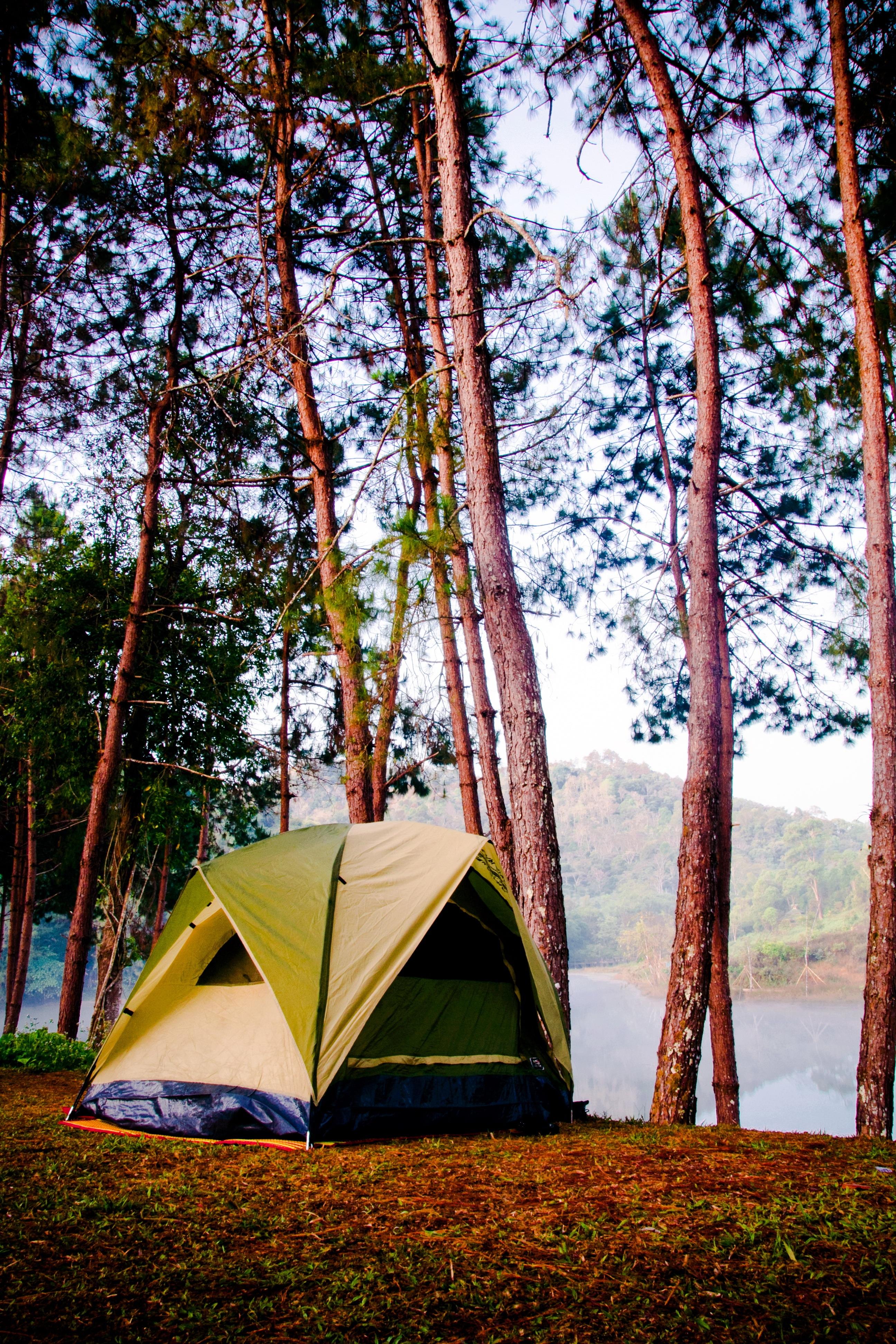 Палатка в лесу картинка