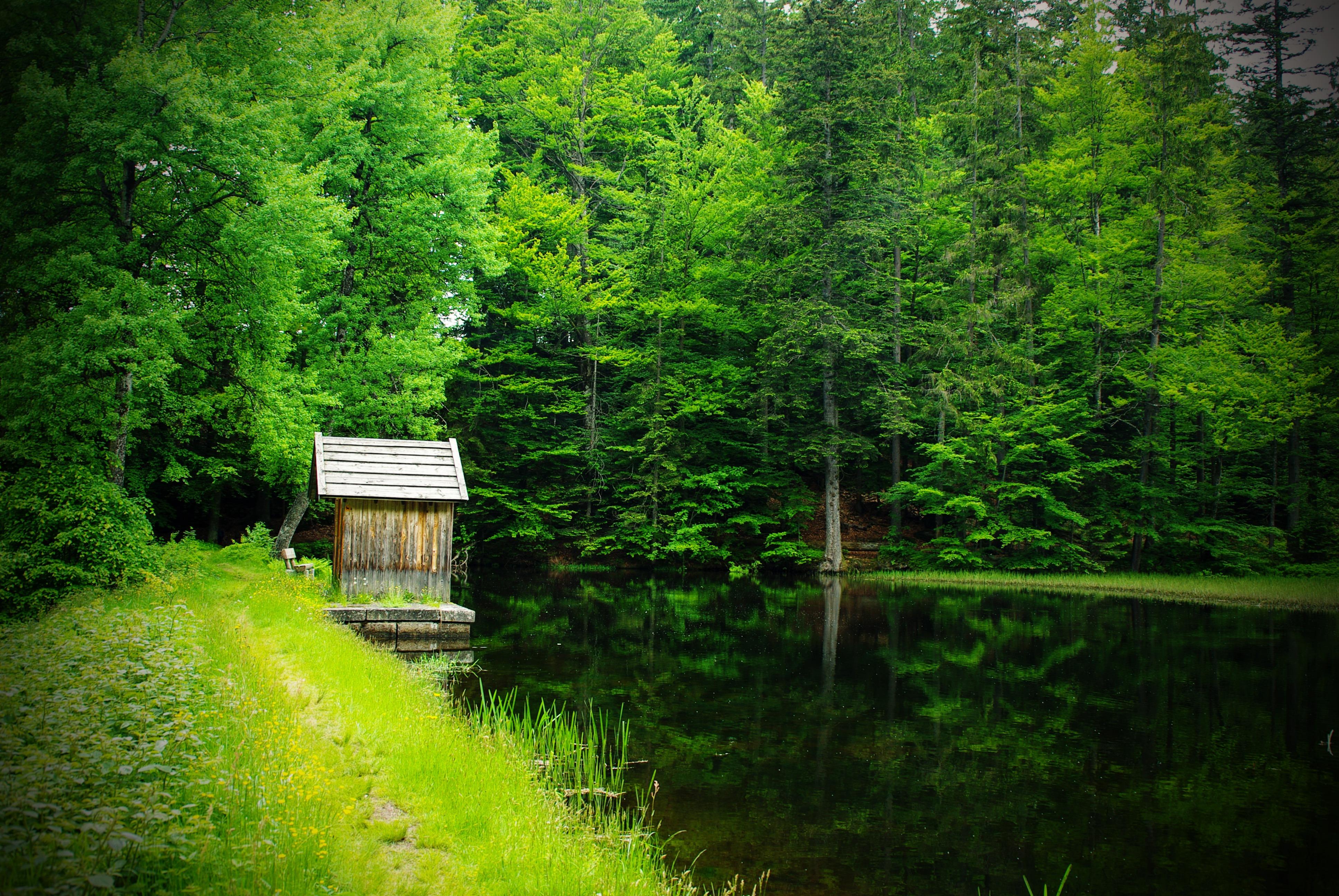 тётя, картинка озера с поляной сегодняшний день знаменит