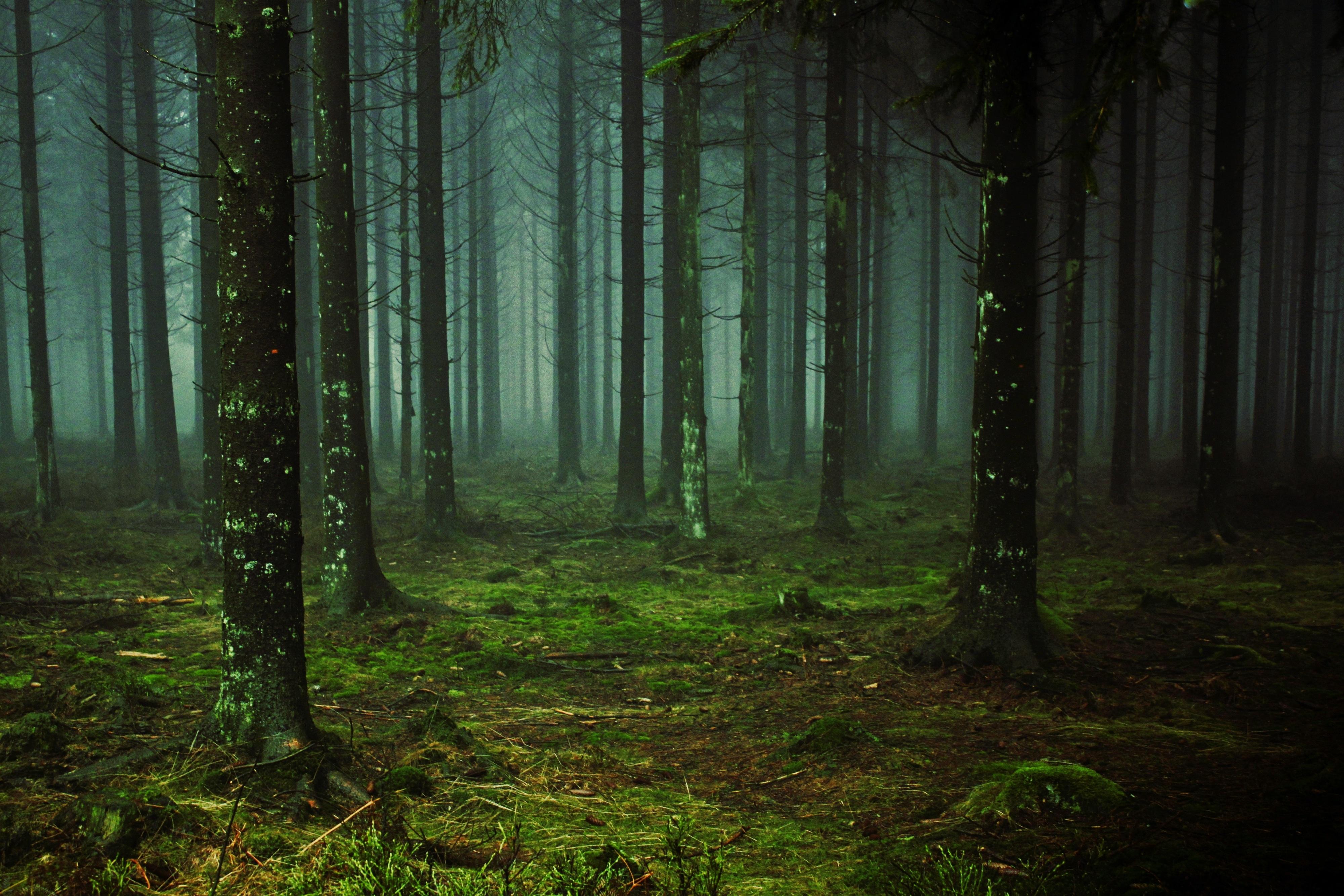 Free Images : nature, swamp, branch, cold, fog, mist ...