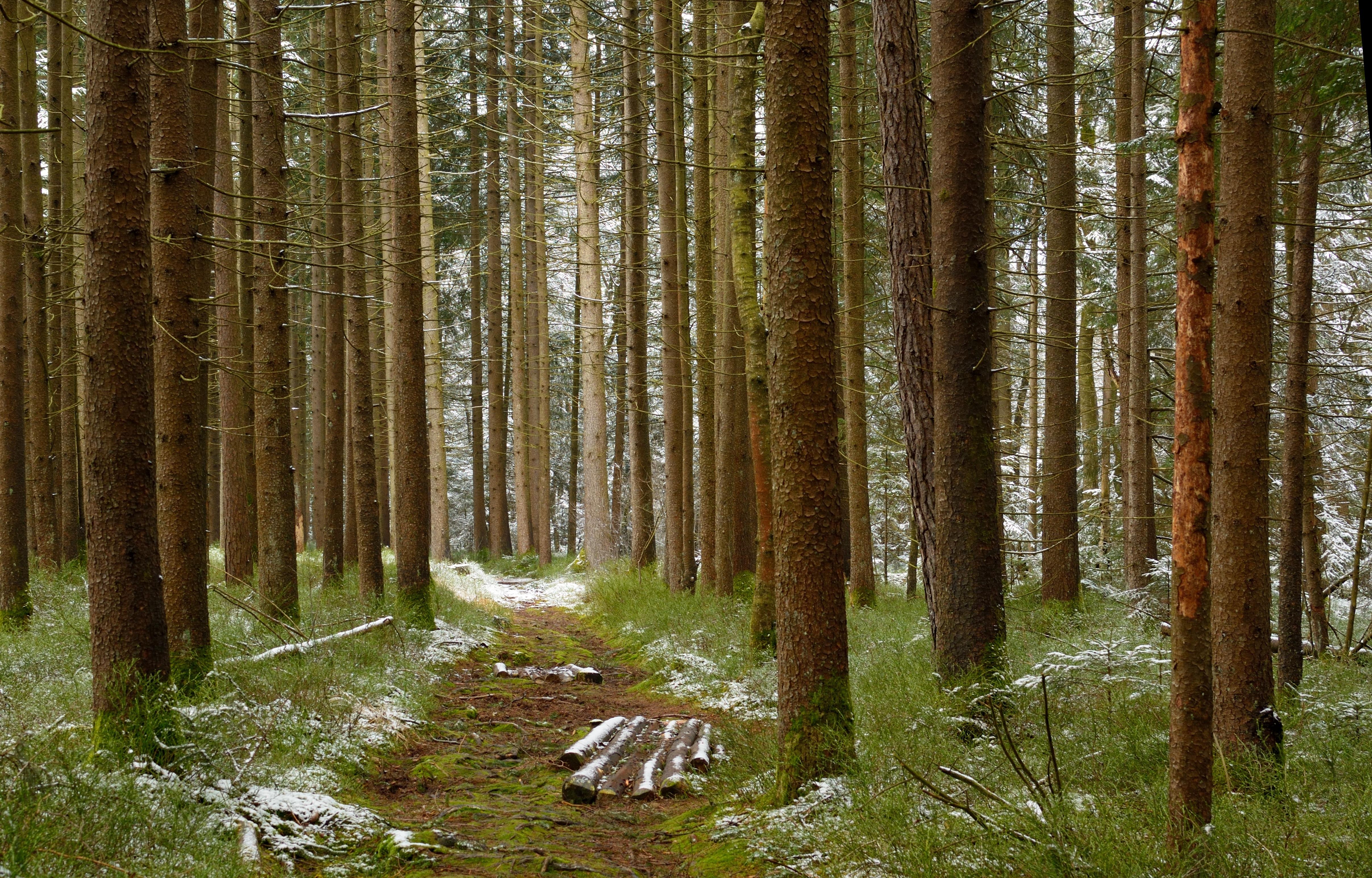 images gratuites arbre la nature marais r gion sauvage branche hiver plante randonn e. Black Bedroom Furniture Sets. Home Design Ideas