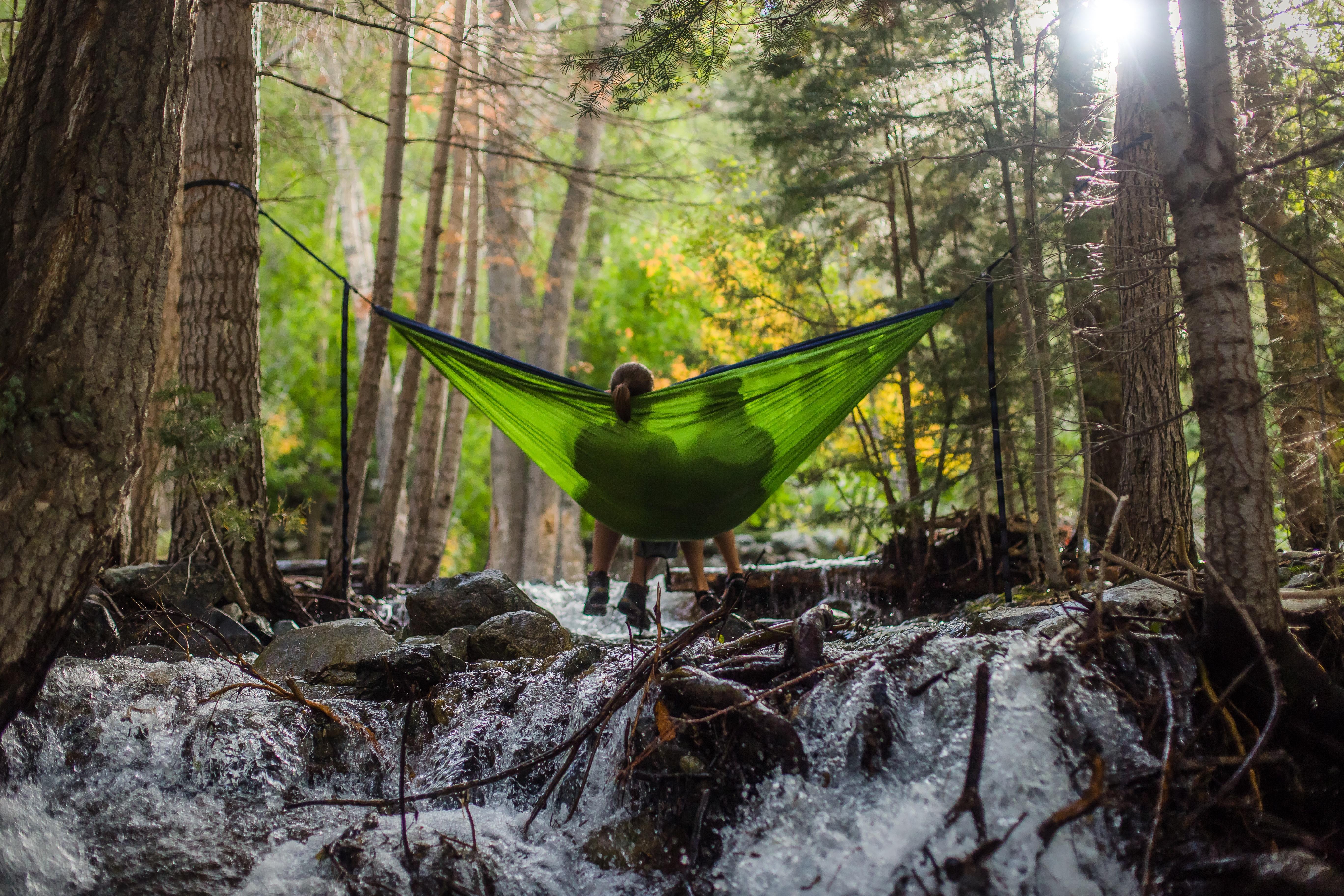 Images Gratuites Arbre La Nature Marais Région Sauvage Piste