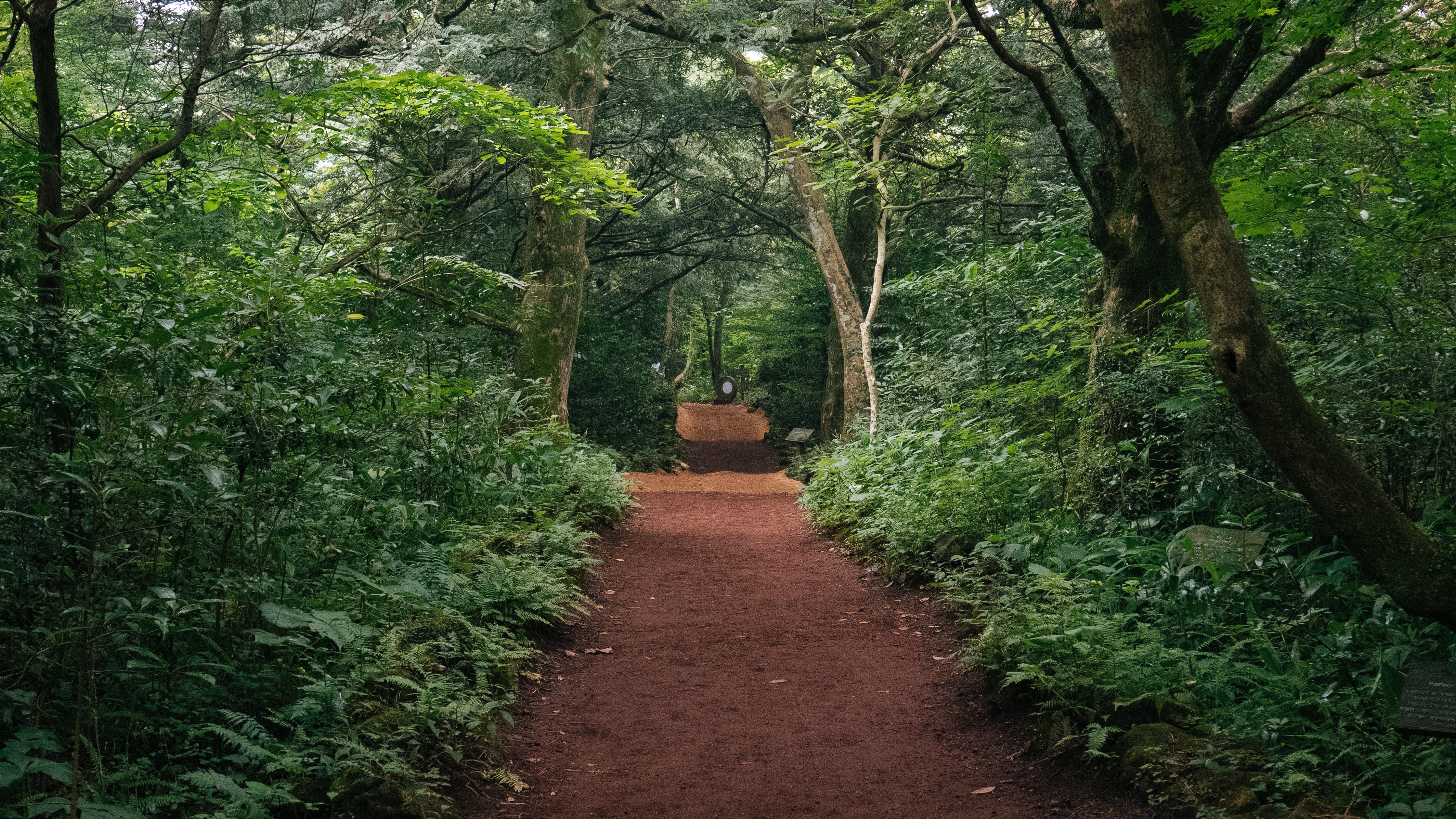 Images Gratuites : arbre, la nature, Piste, lumière du