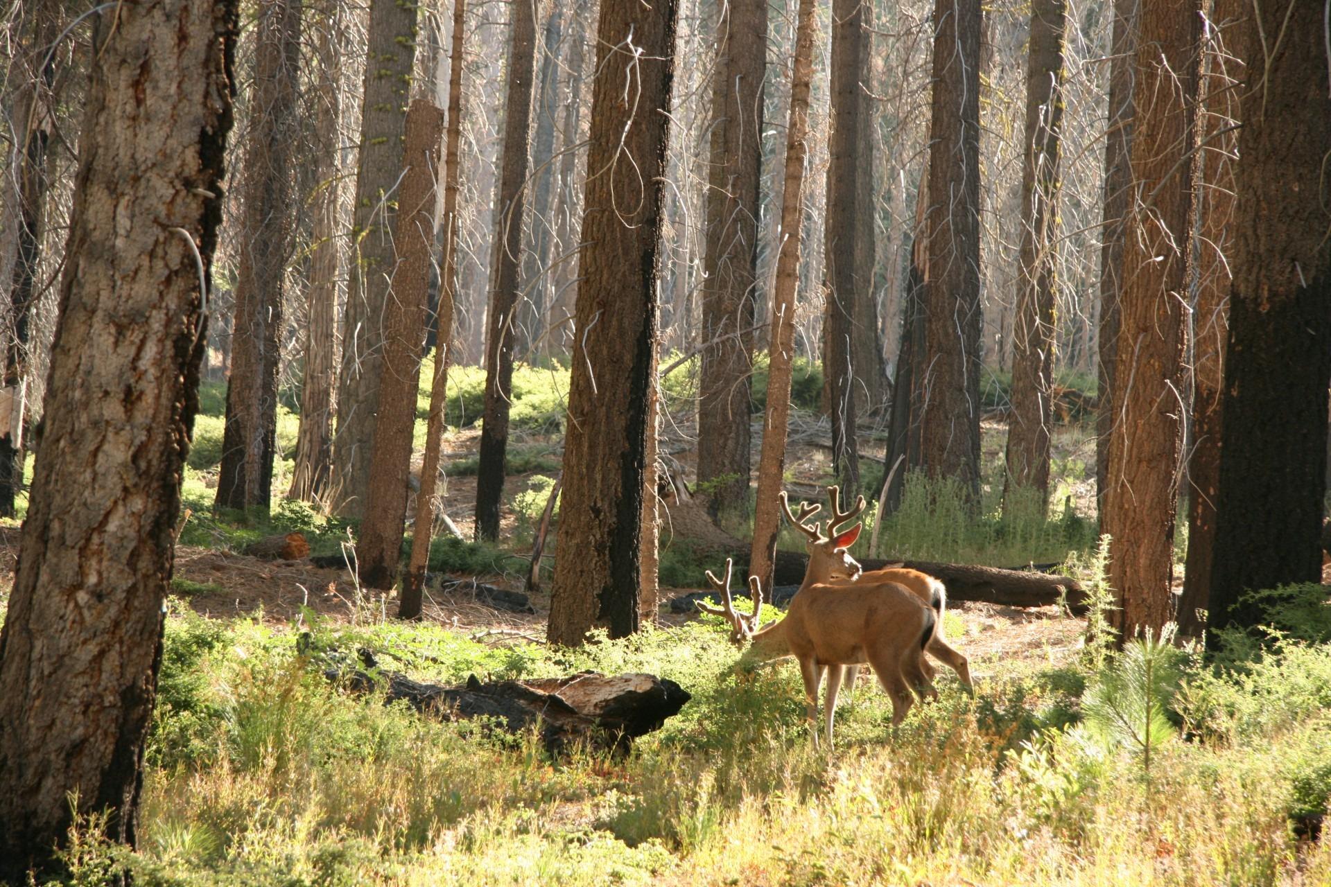 4300 Gambar Hewan Ekosistem Hutan Gratis
