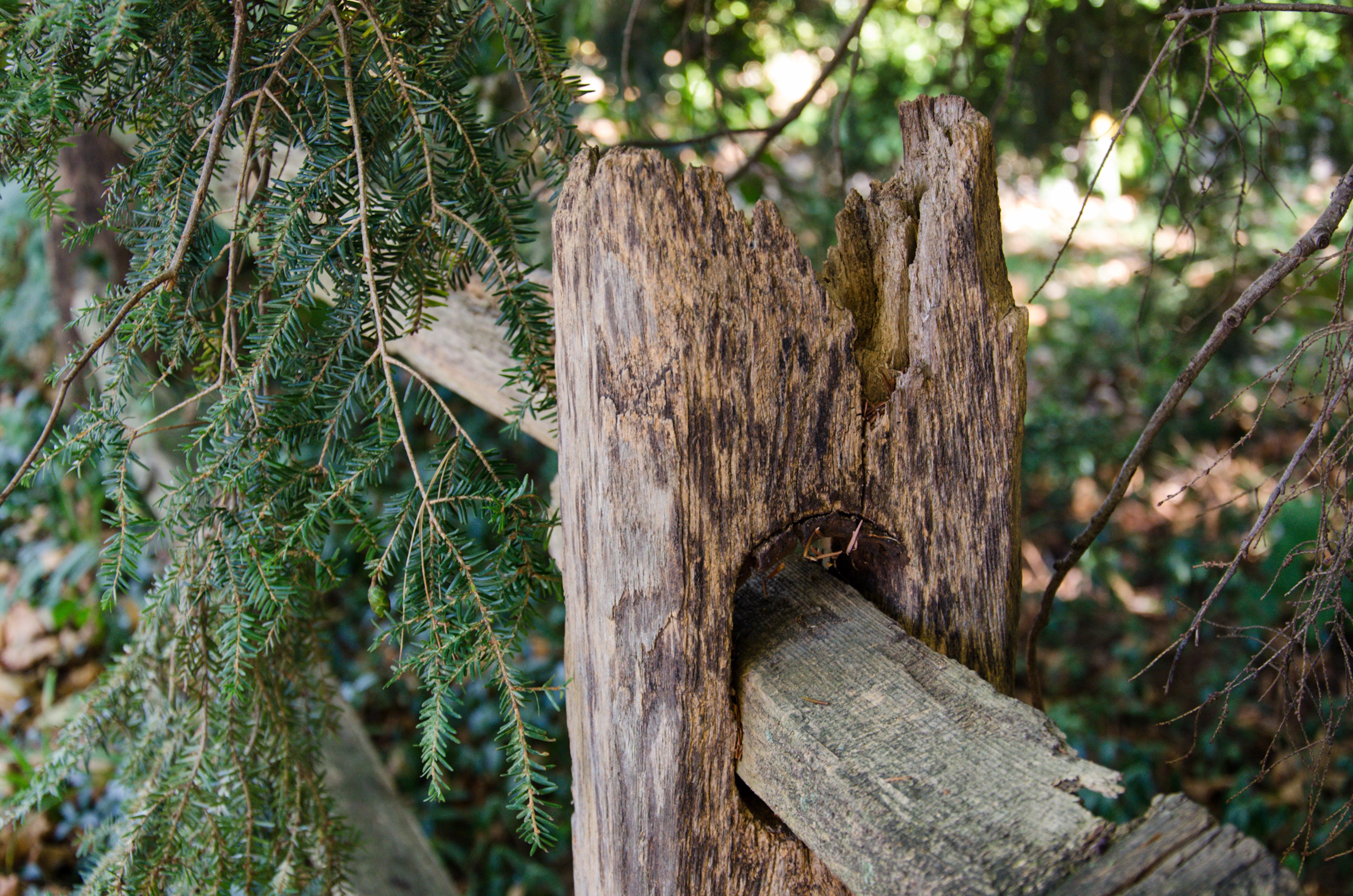 Baum Natur Wald Wildnis Ast Zaun Pflanze Holz Blatt Blume Kofferraum Sommer Tierwelt Dschungel Herbst