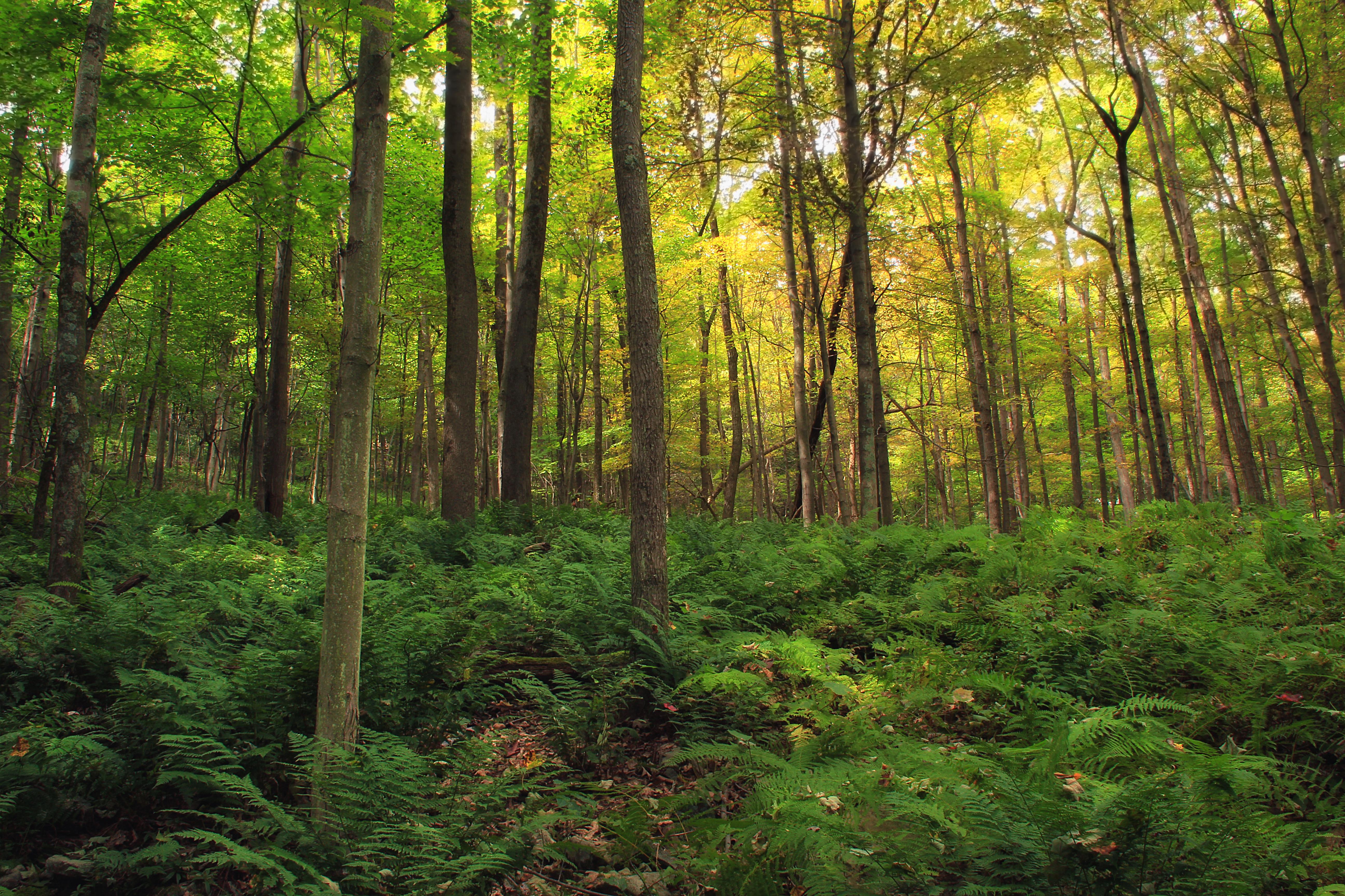 крупные, картинки с лиственным лесом поляне печать фотопродукции нашей
