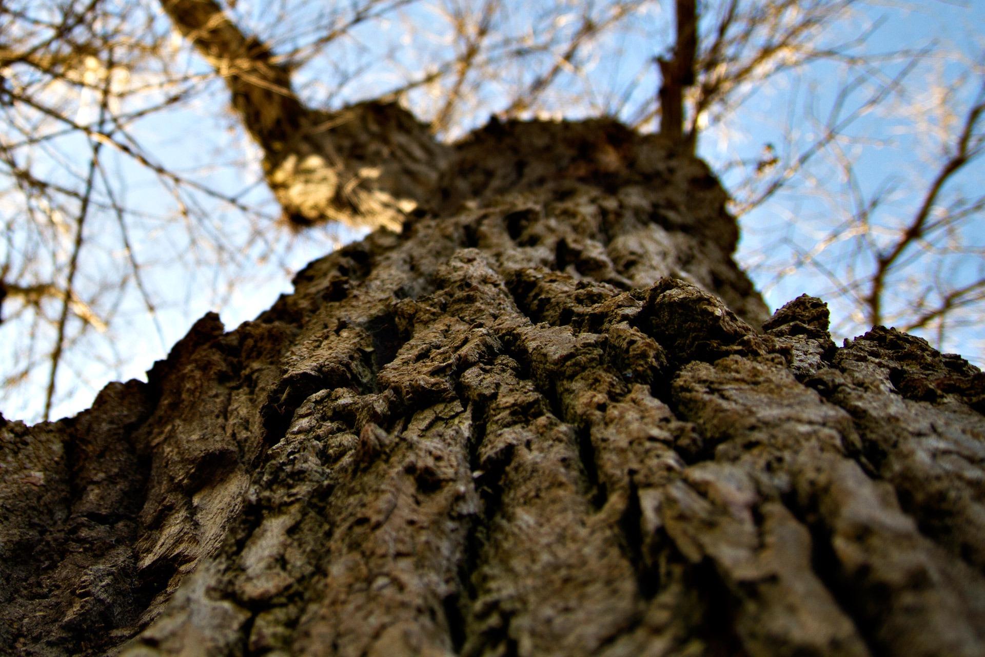 무료 이미지 자연 숲 황야 분기 목재 잎 꽃 트렁크 야생 생물 환경 가을 흙