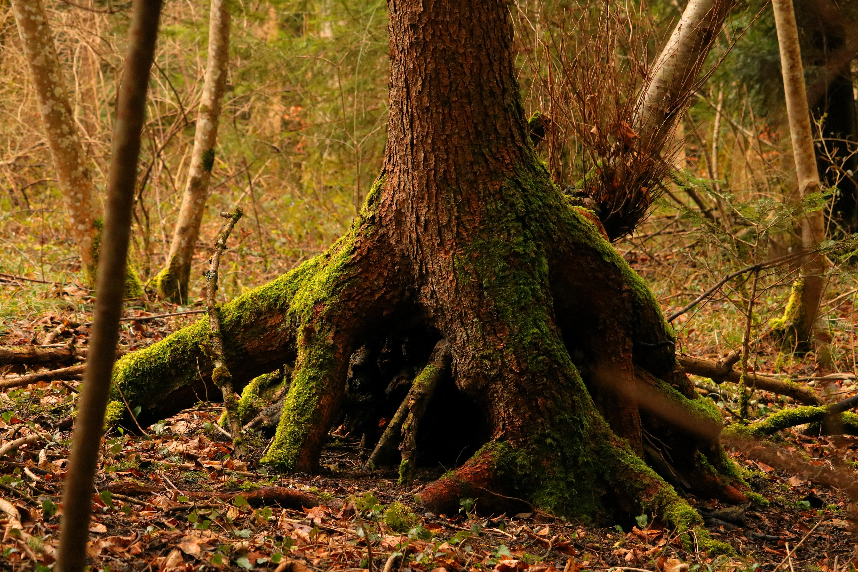 Gambar Alam Gurun Cabang Menanam Sinar Matahari Daun Bagasi