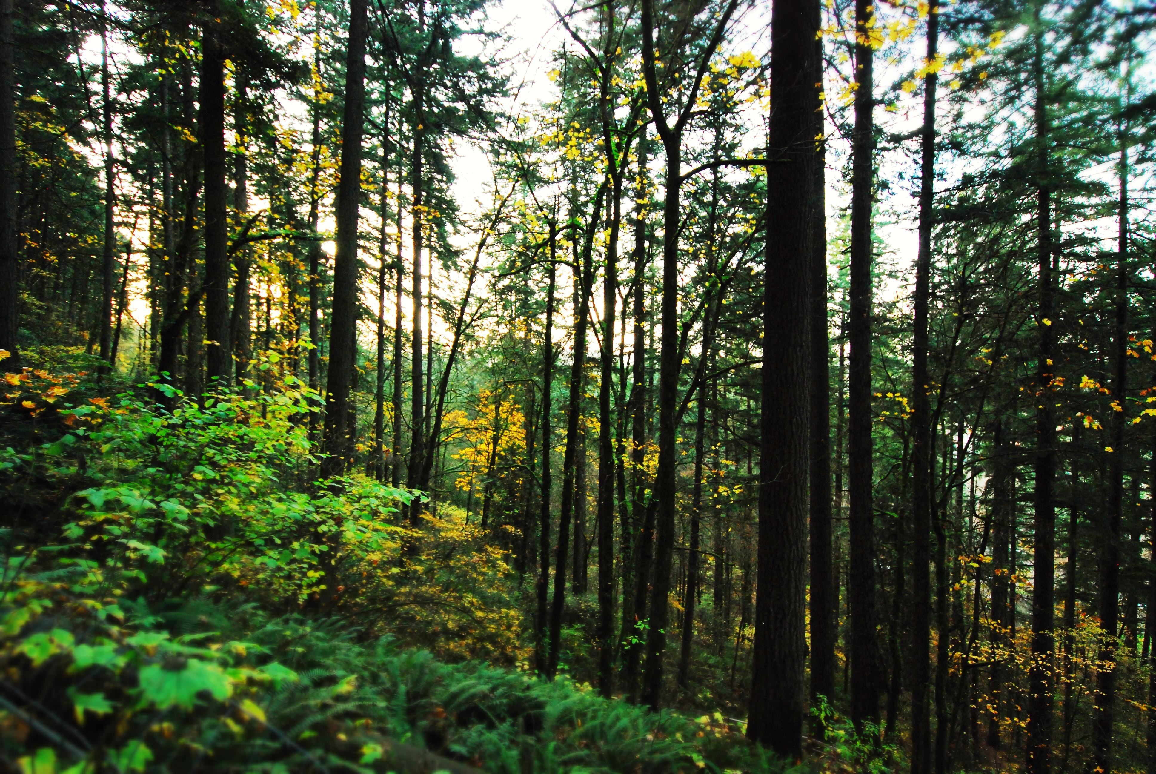 Identifying False Cedars