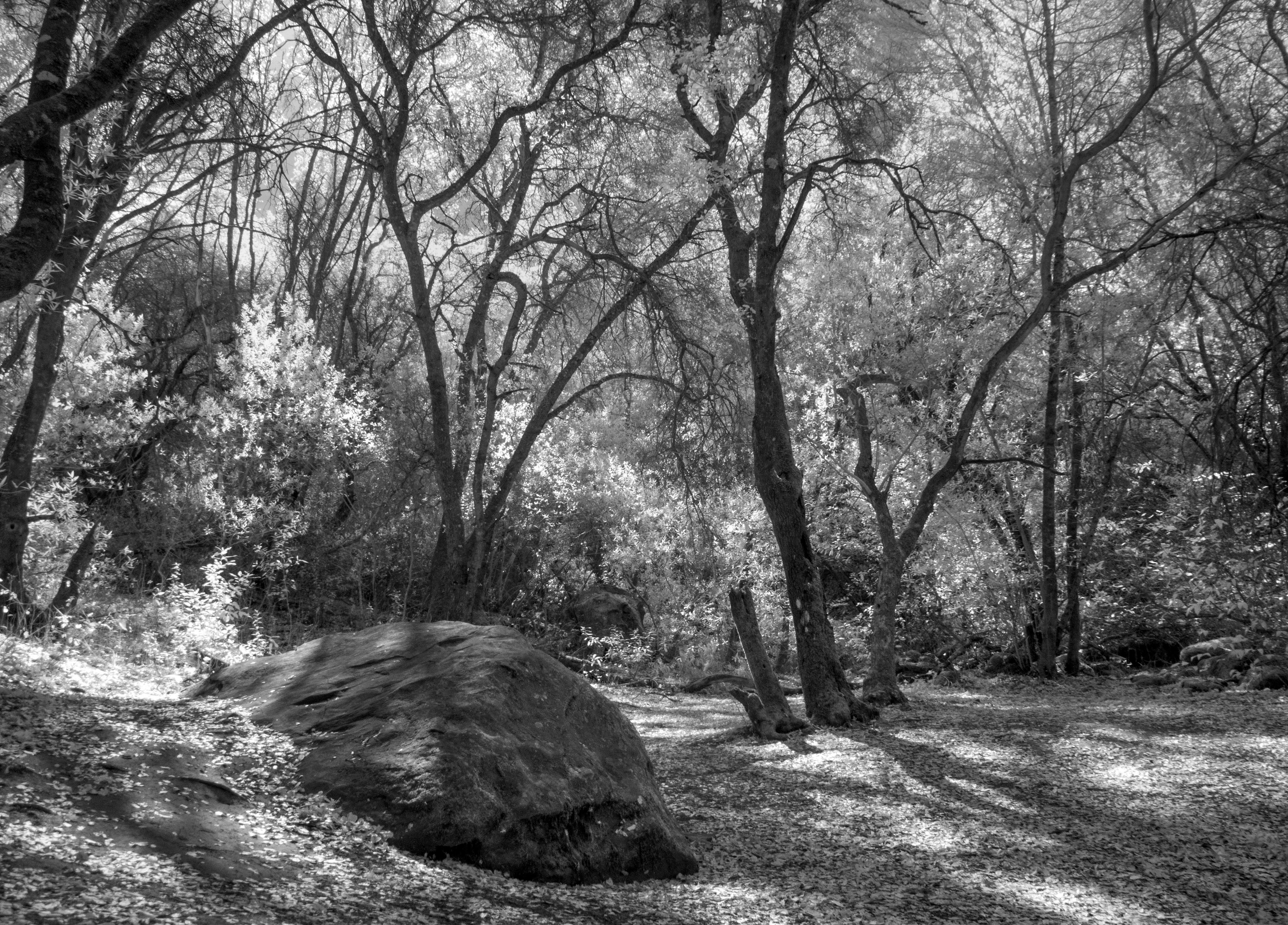 Obrazy : strom, pr\u00edroda, les, divokos\u0165, vetva, zimn\u00e9 ...