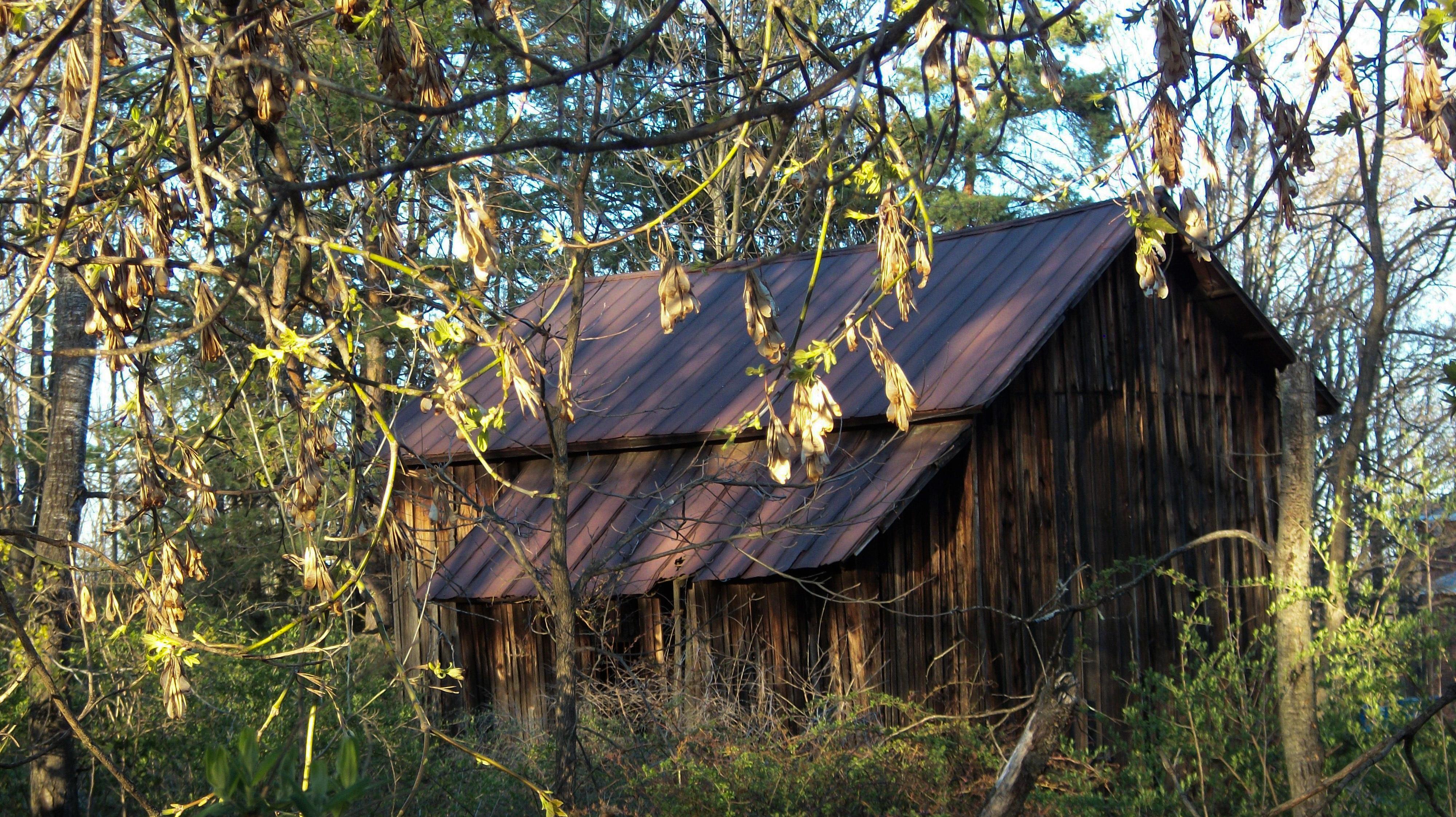 무료 이미지 : 나무, 숲, 황야, 농장, 잎, 외양간, 촌사람 같은 ...