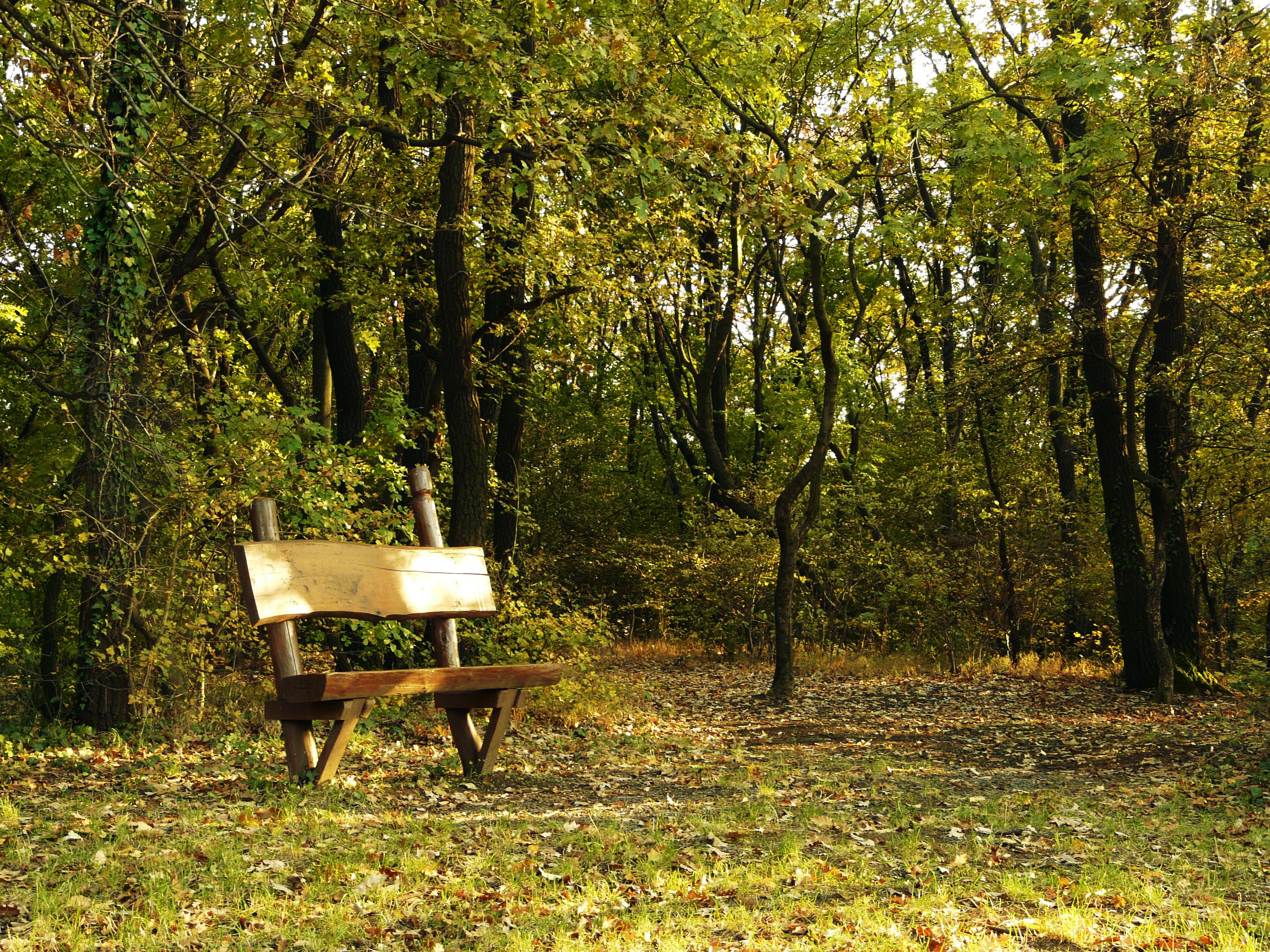 Fotos gratis rbol naturaleza bosque desierto for Banco de paletas al aire libre
