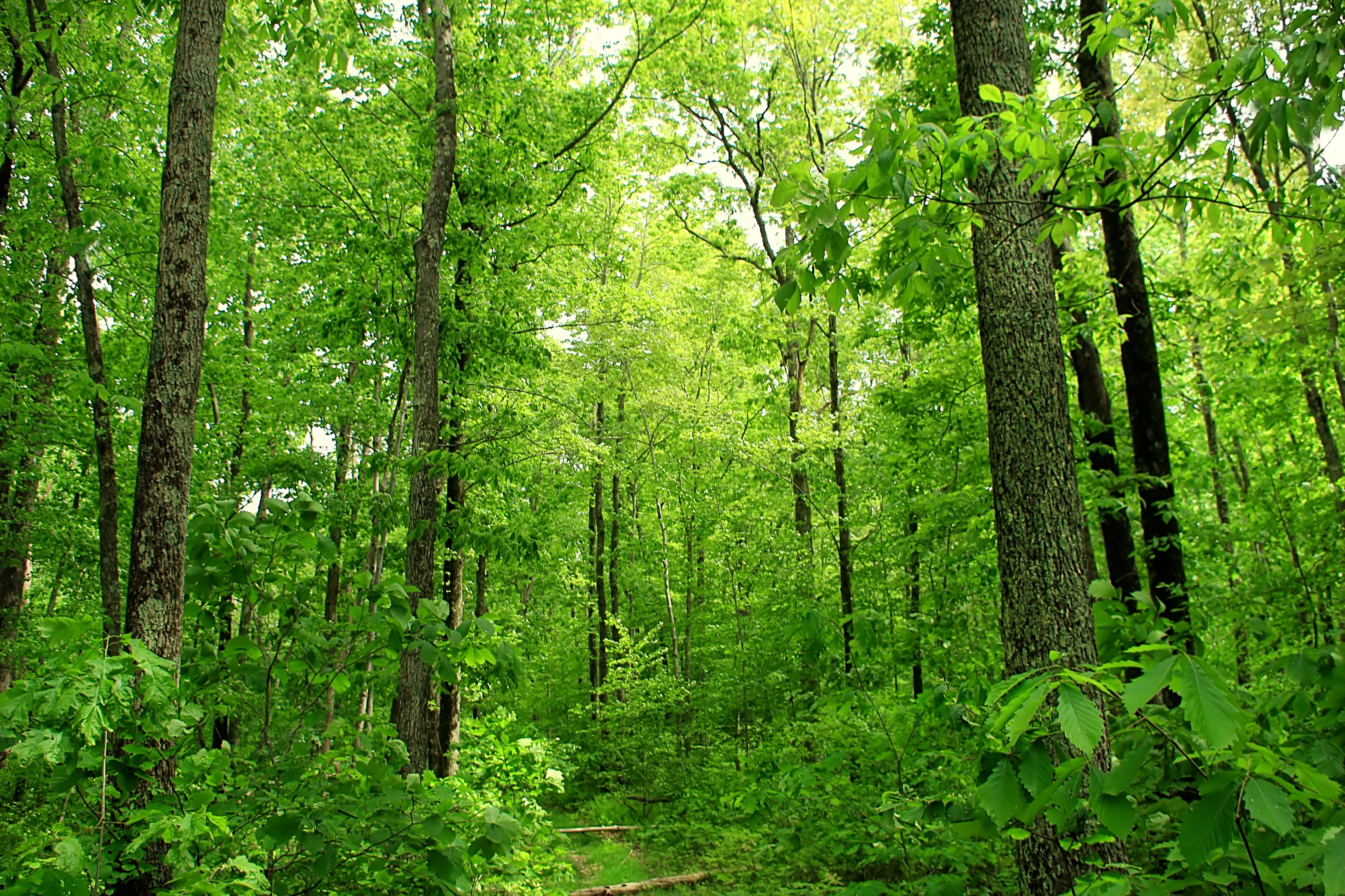 Леса строительные рамные фото дождаться