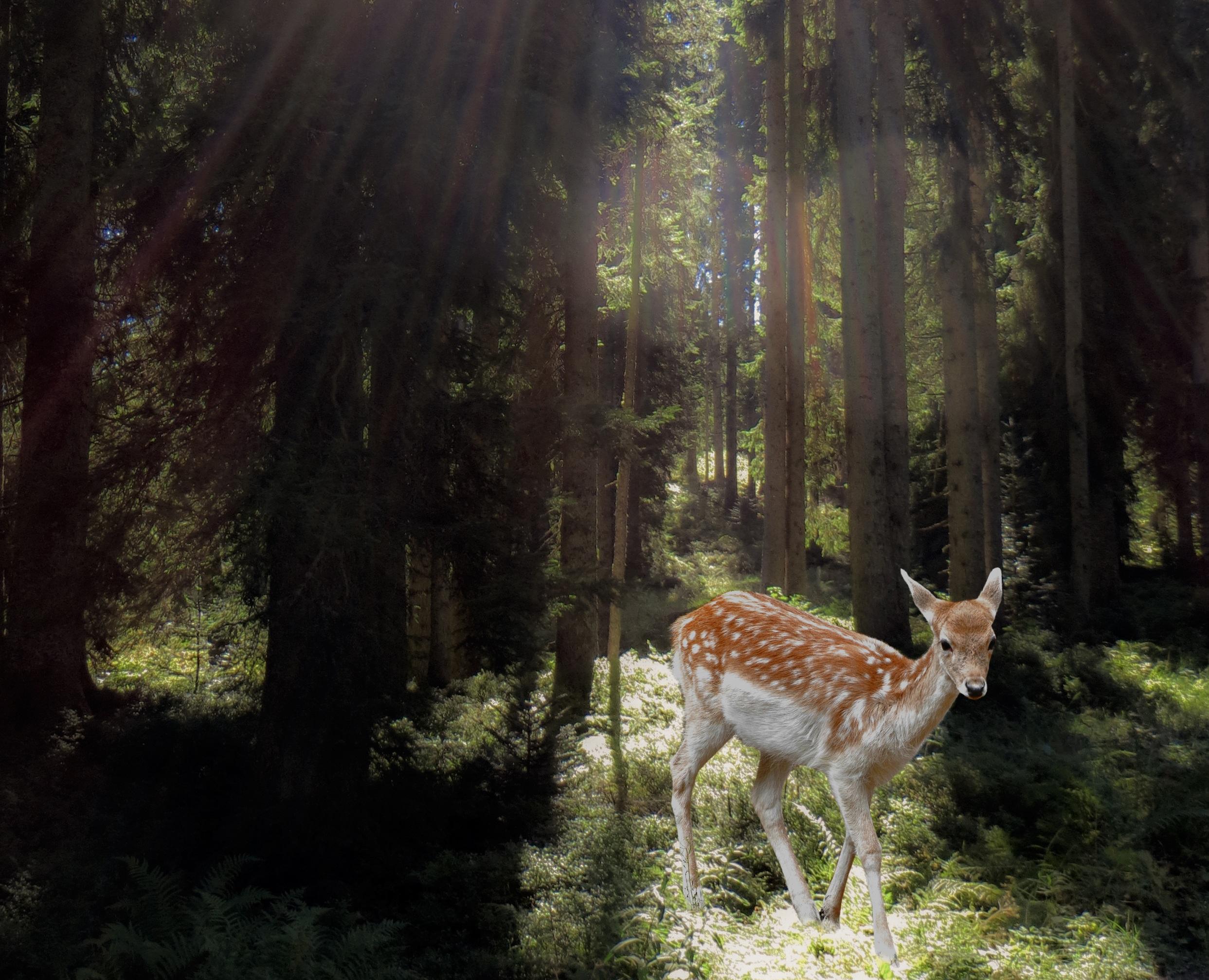 Сексуальные фантазии на дикой природе