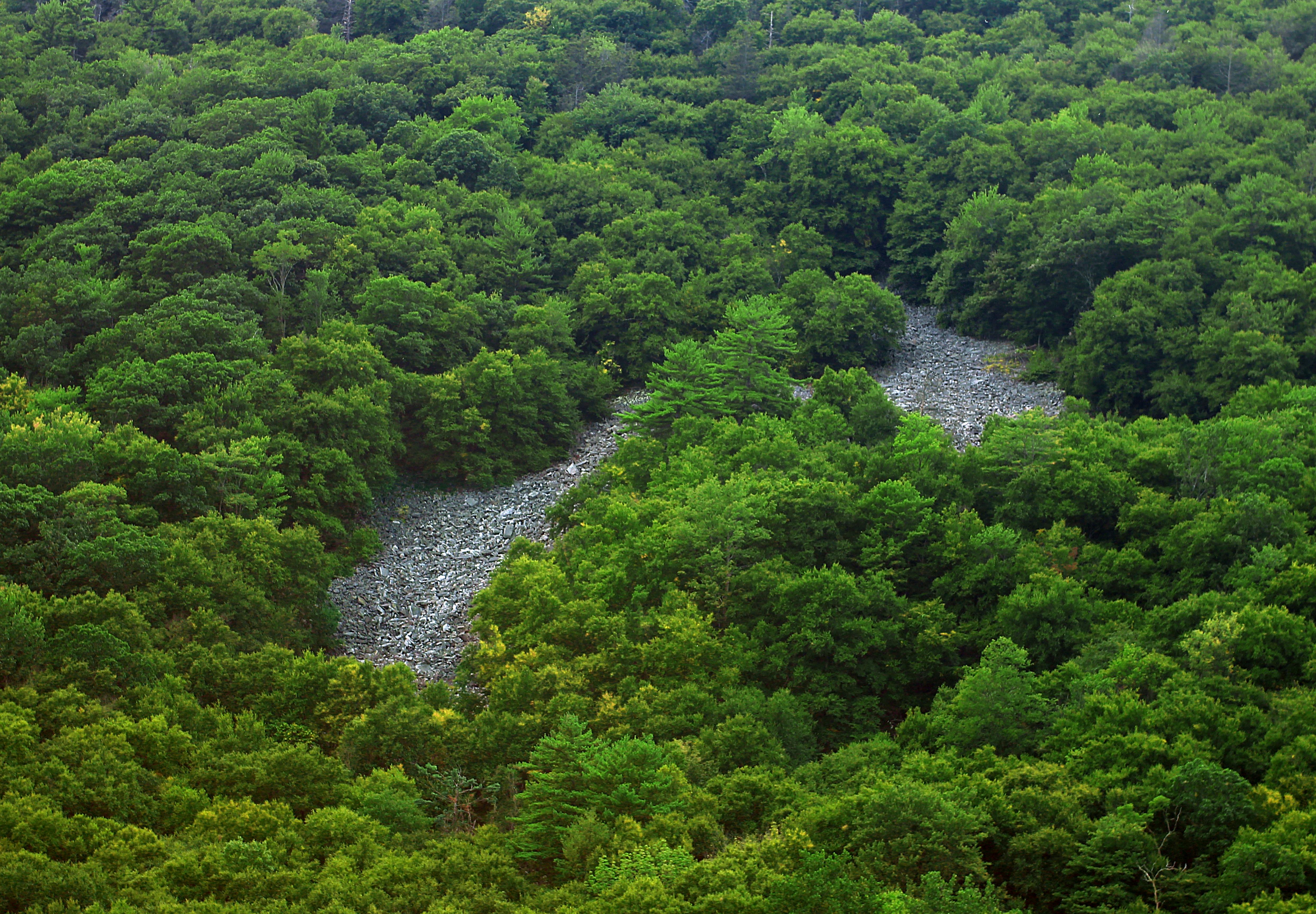 Planter Dans Un Talus free images : tree, wilderness, mountain, hiking, river