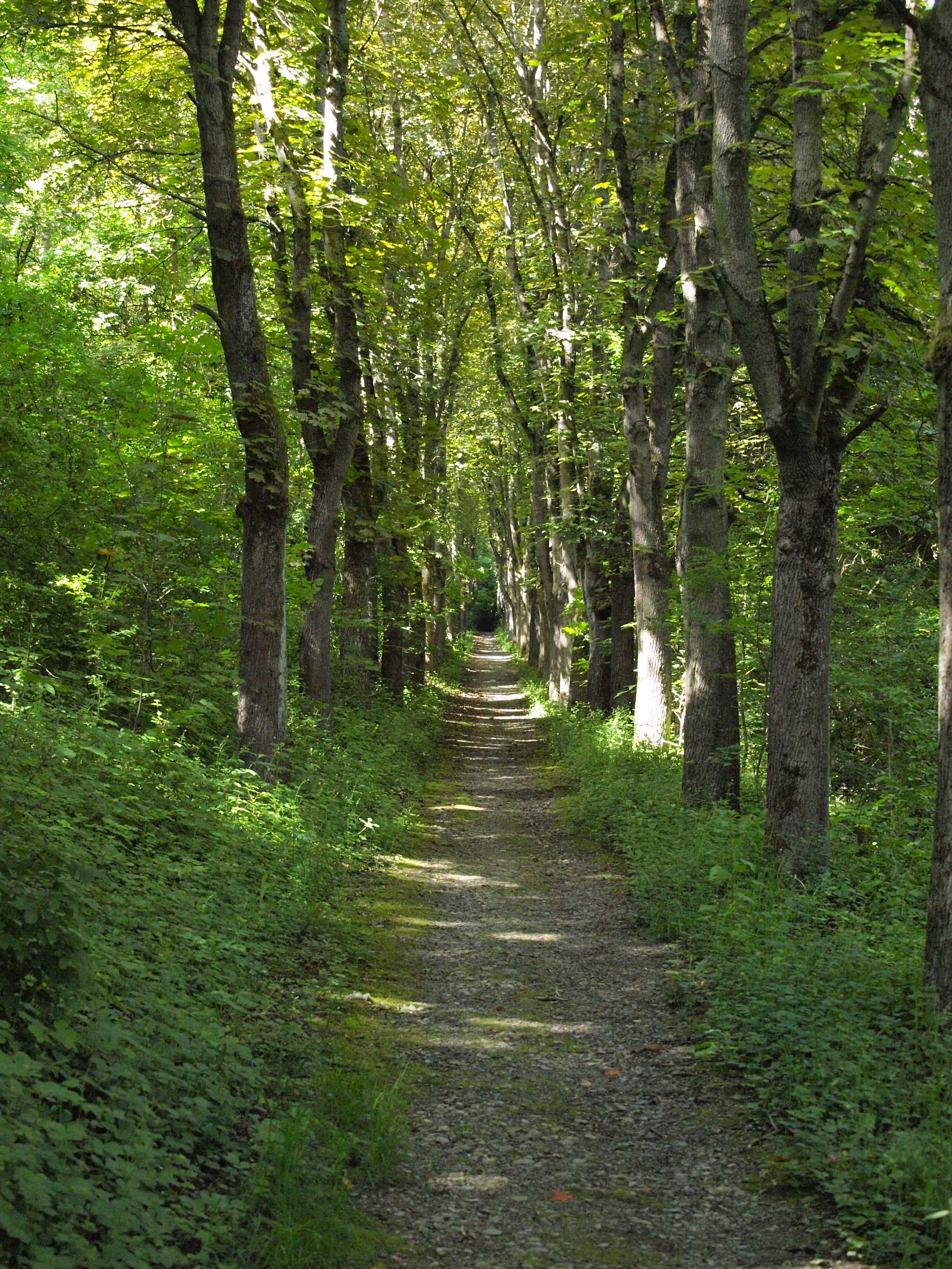 Images gratuites arbre la nature r gion sauvage - Arbres a feuilles caduques ...