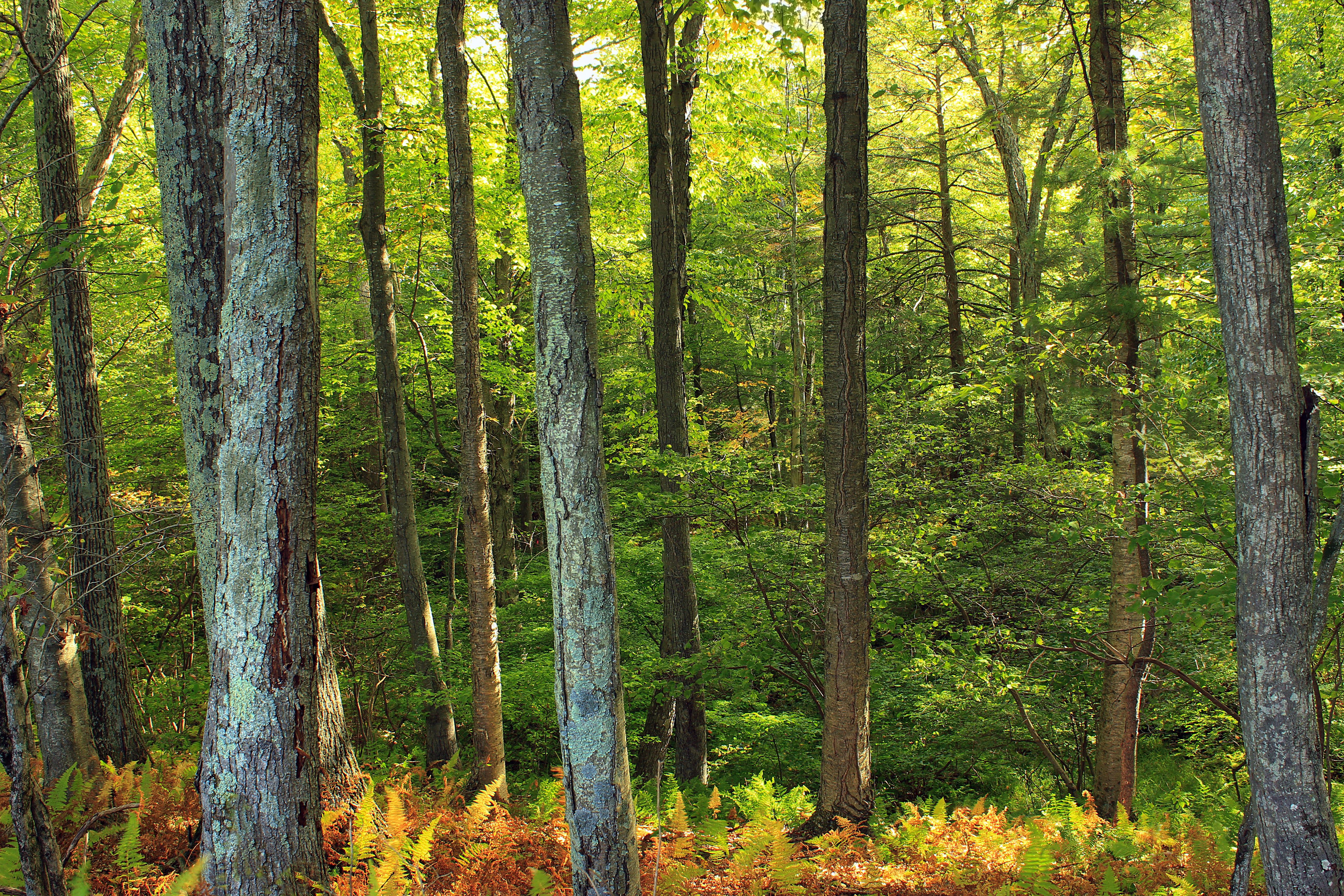 лиственный лес картинки для презентации времени суток