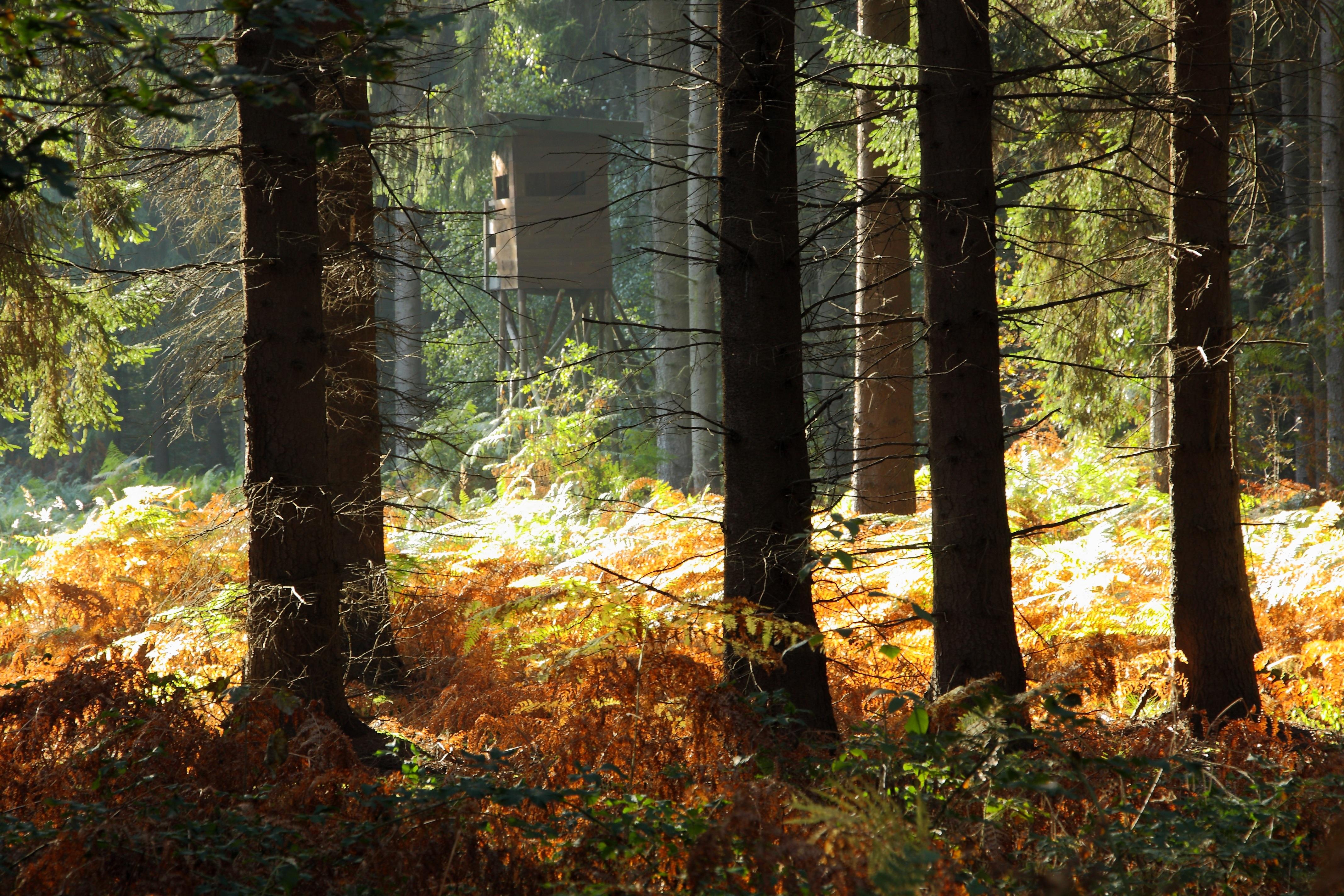 images gratuites arbre la nature r gion sauvage plante piste lumi re du soleil feuille. Black Bedroom Furniture Sets. Home Design Ideas