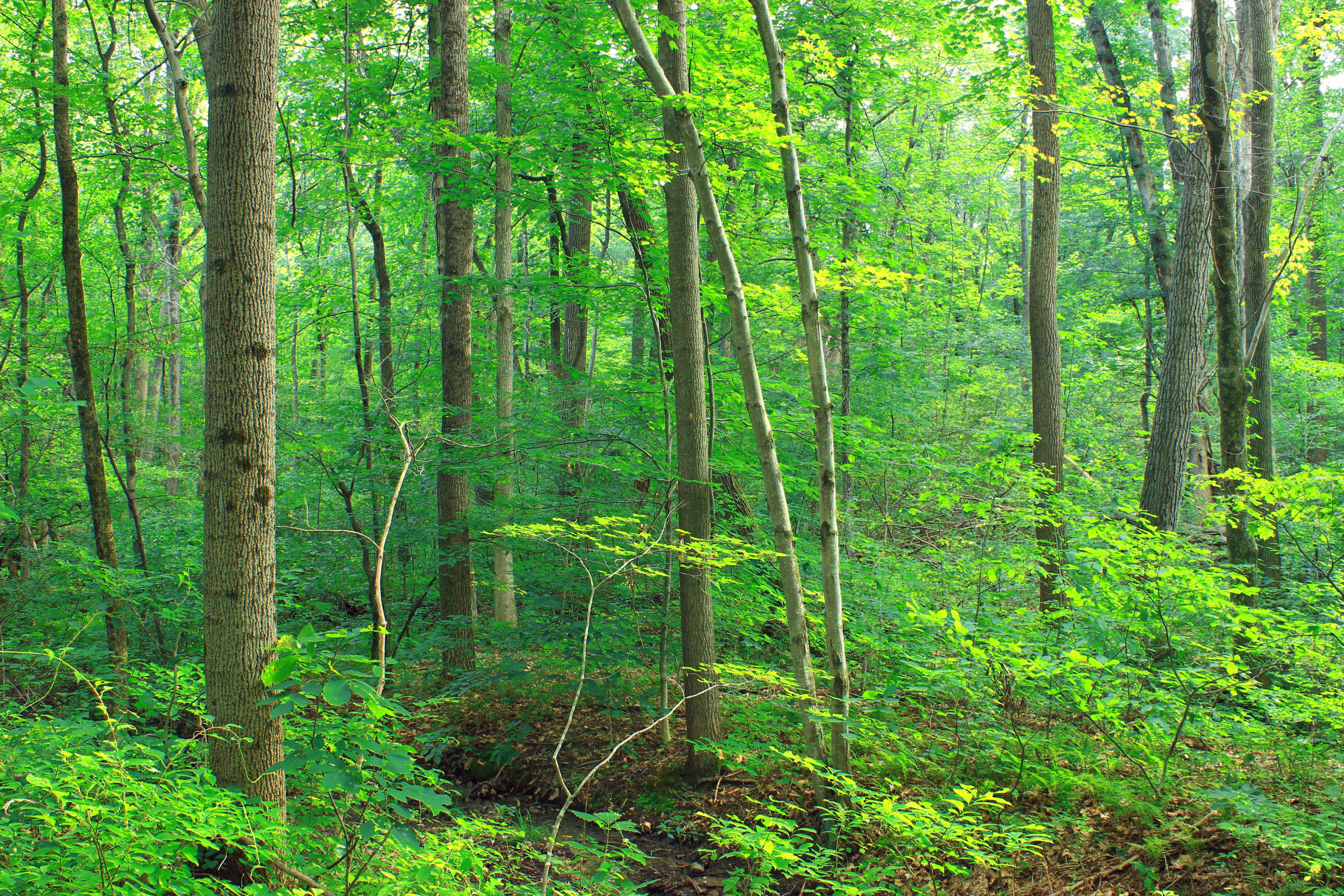 картинки разного леса