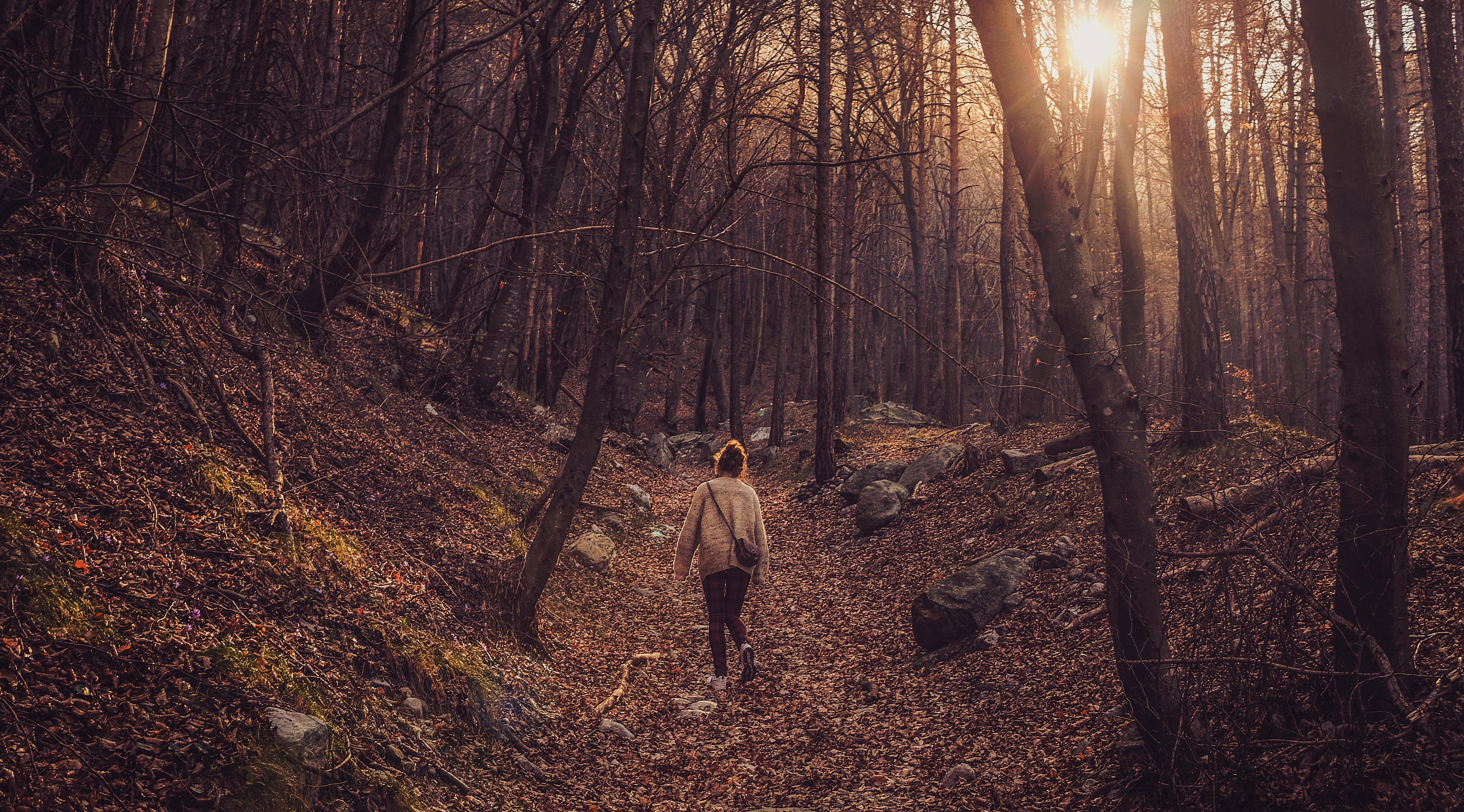 Kostenlose Foto Baum Natur Wald Wildnis Holz Sonnenuntergang