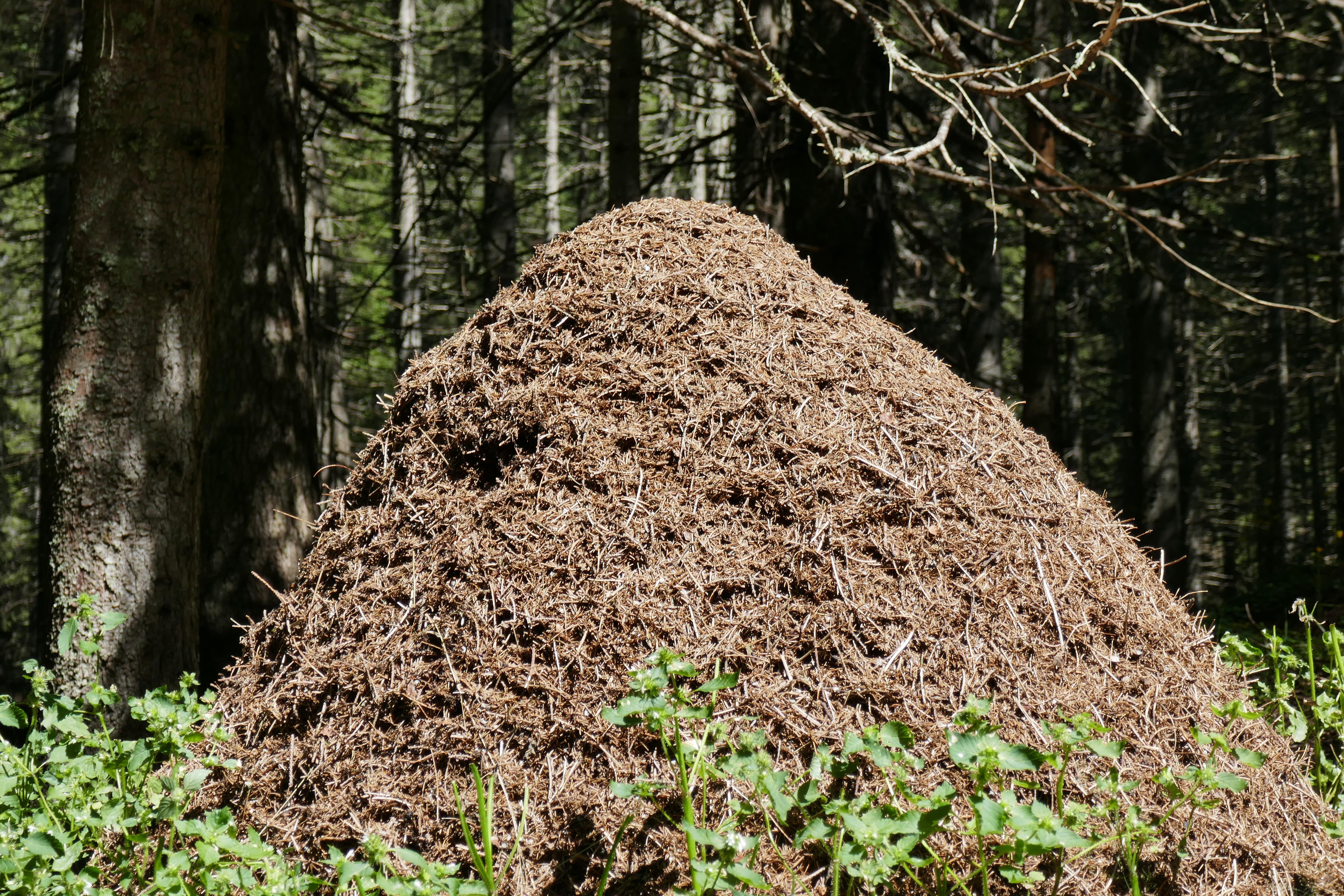 смотря муравейник в лесу картинки такие