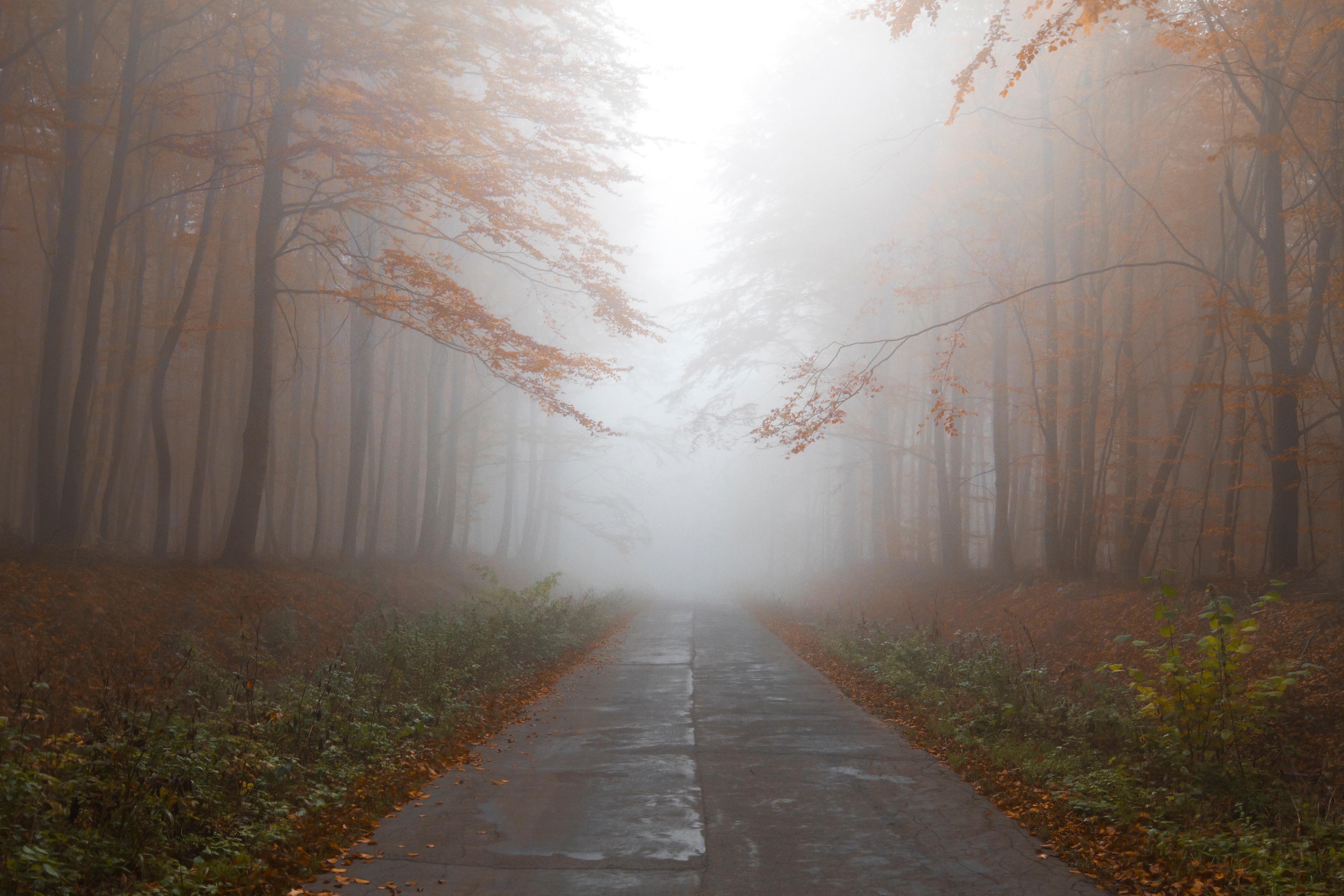 картинки сильного тумана предполагают