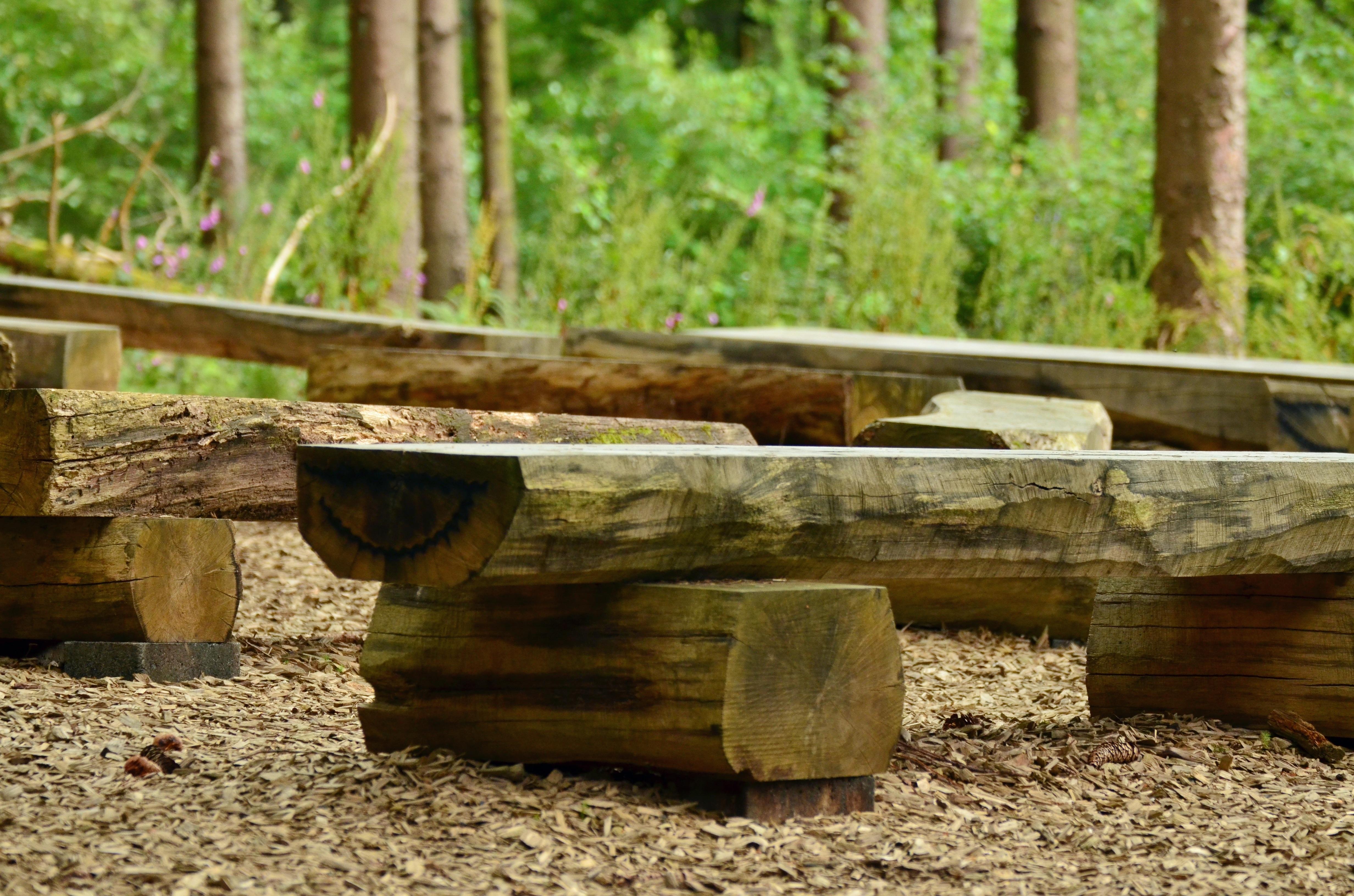 Fotos gratis : árbol, naturaleza, bosque, banco, hoja, asiento ...