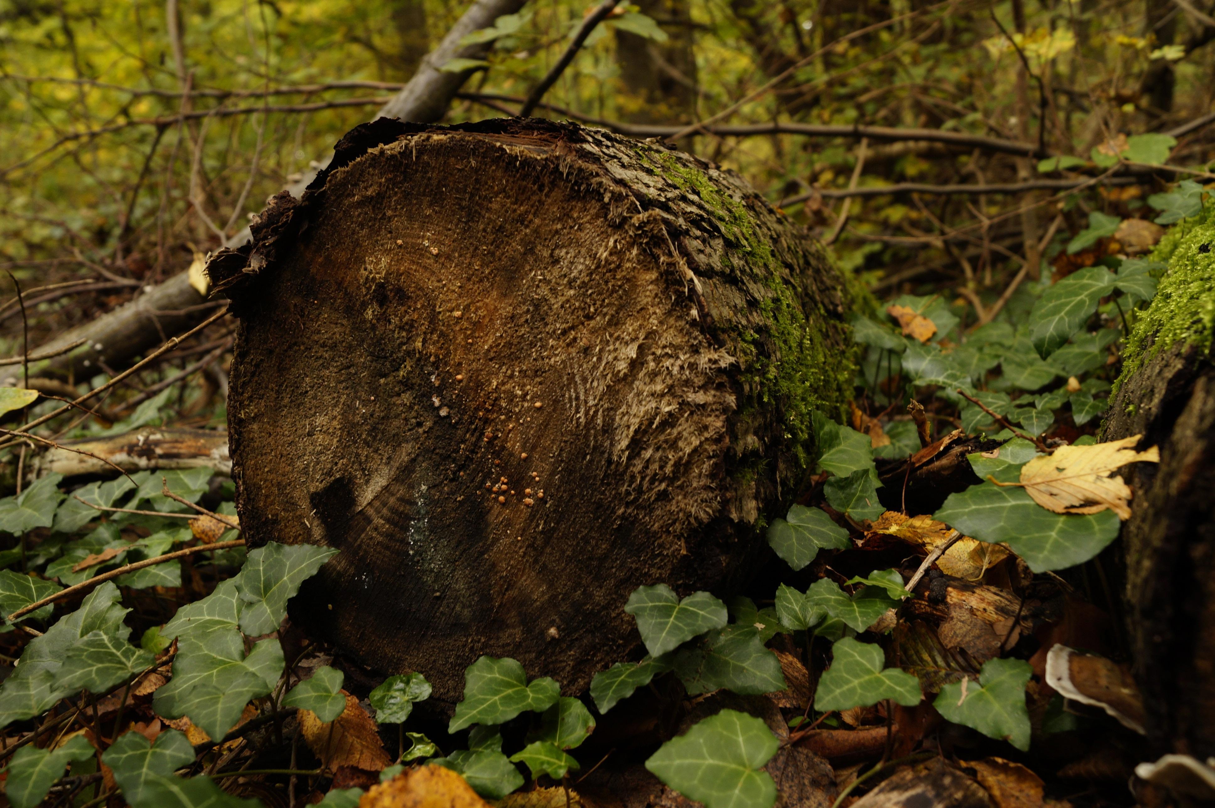 Free Images Nature Forest Wood Leaf Trunk Moss Wildlife Log