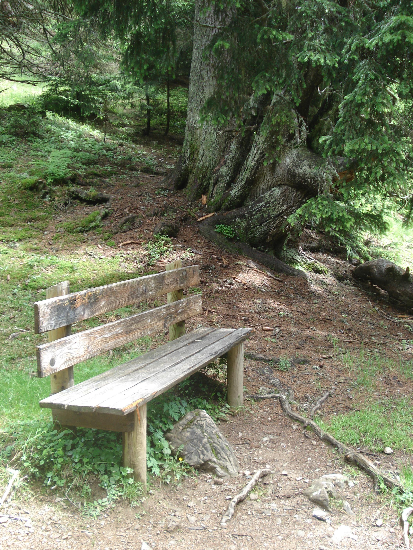 Fotos gratis : árbol, naturaleza, bosque, sendero, selva, paz ...