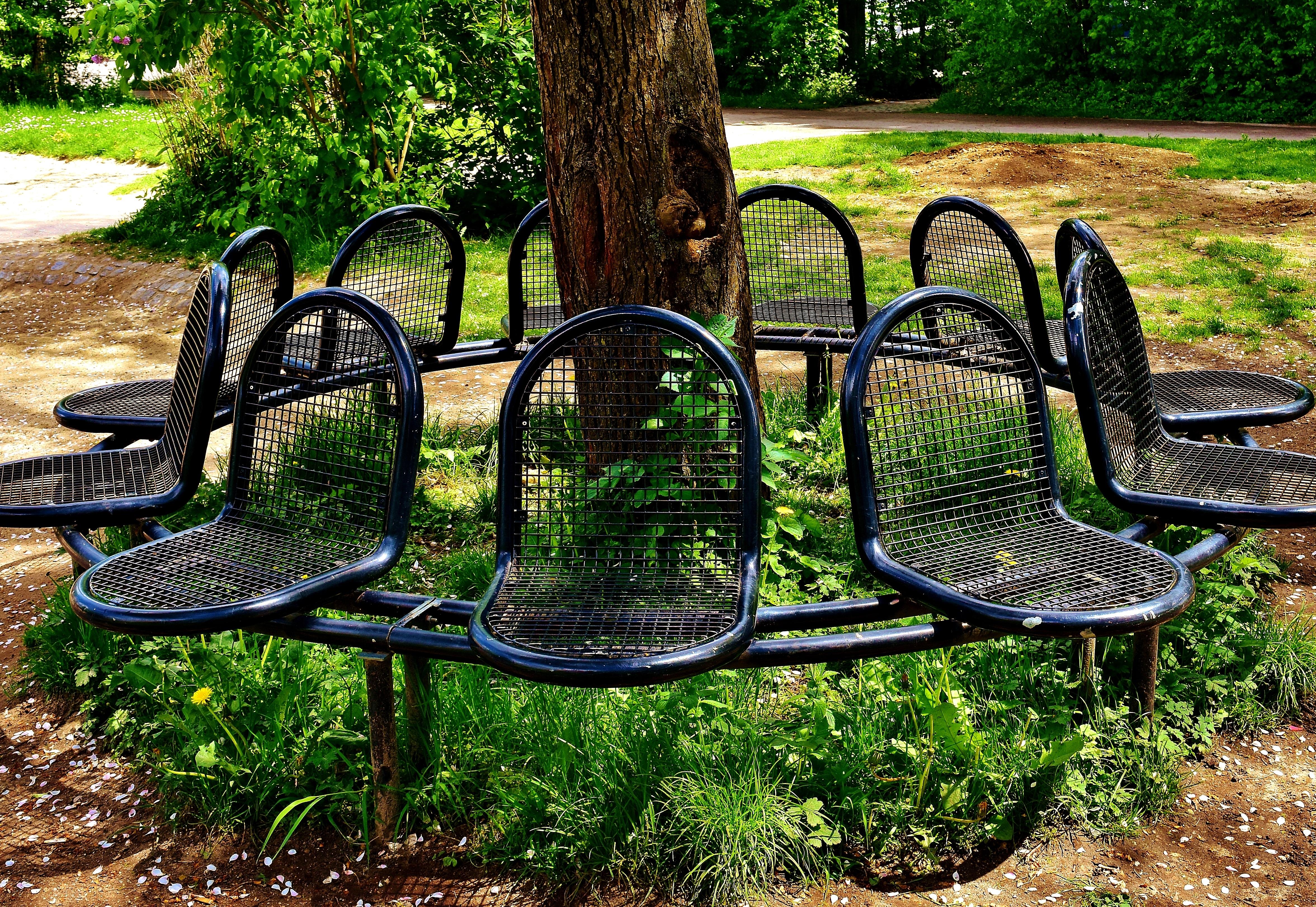Vieux Banc De Jardin images gratuites : arbre, la nature, herbe, pelouse, siège