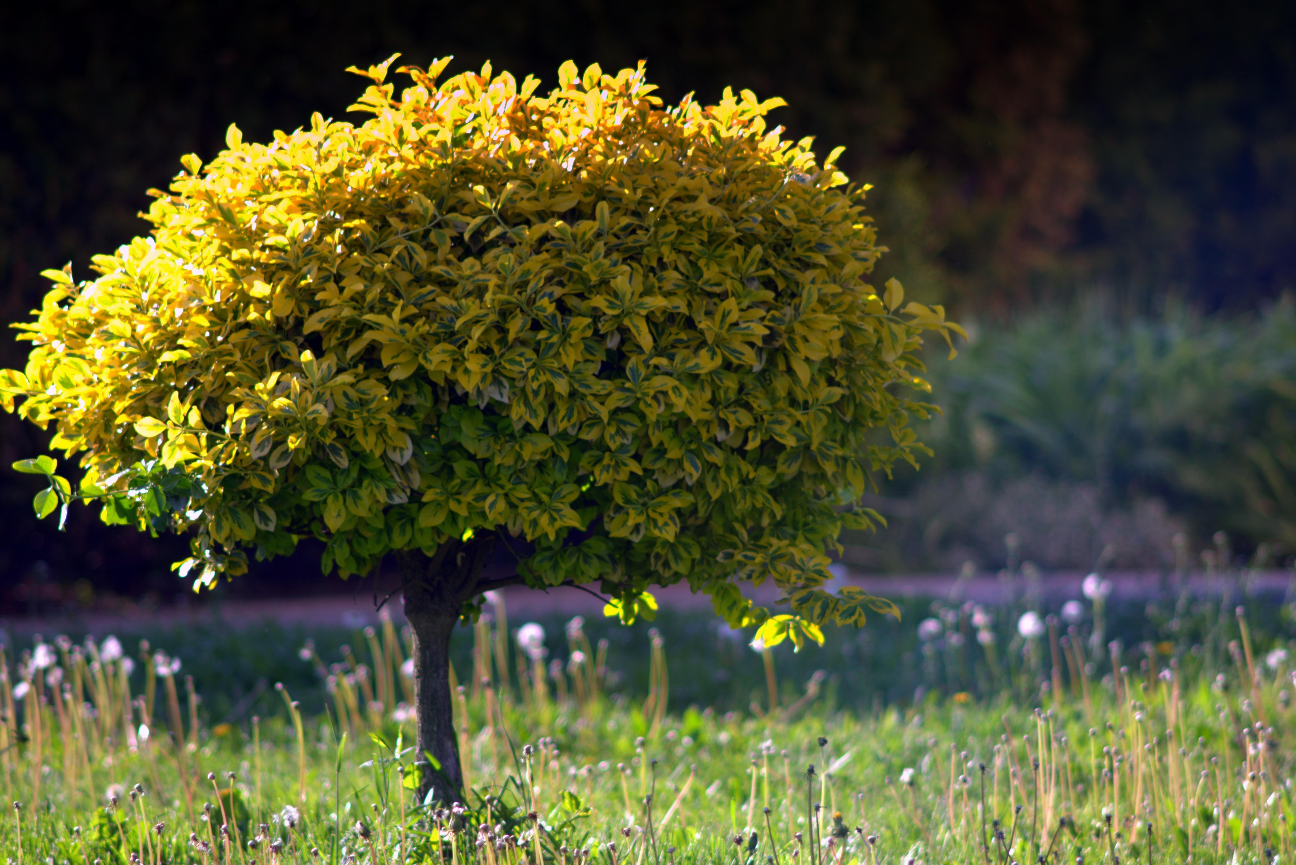 Fotos gratis naturaleza c sped prado luz de sol hoja for Unusual small trees