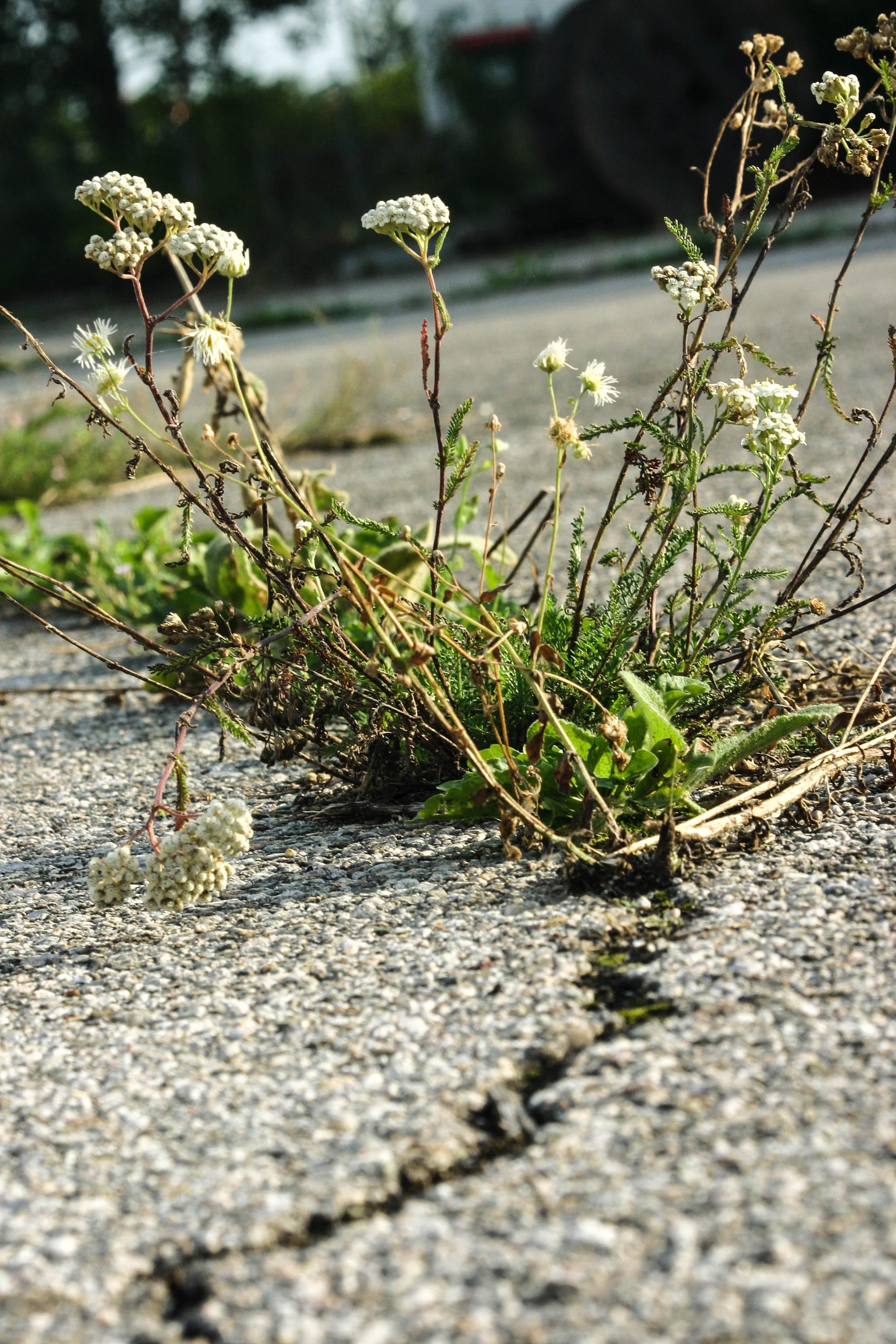banco de imagens rvore ramo flor plantar estrada folha flor asfalto padronizar verde erva produzir solo rachadura botnica lacuna flora