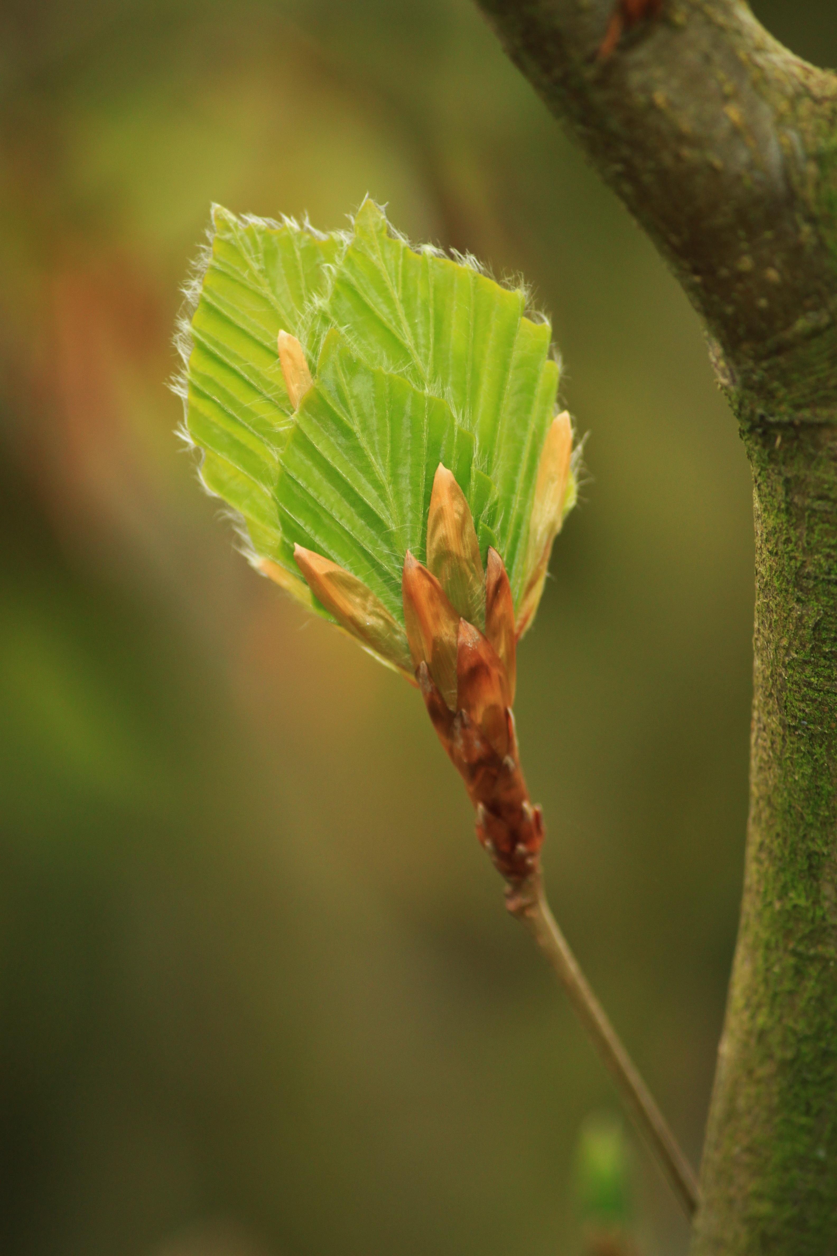 Ветка лиственного дерева фото