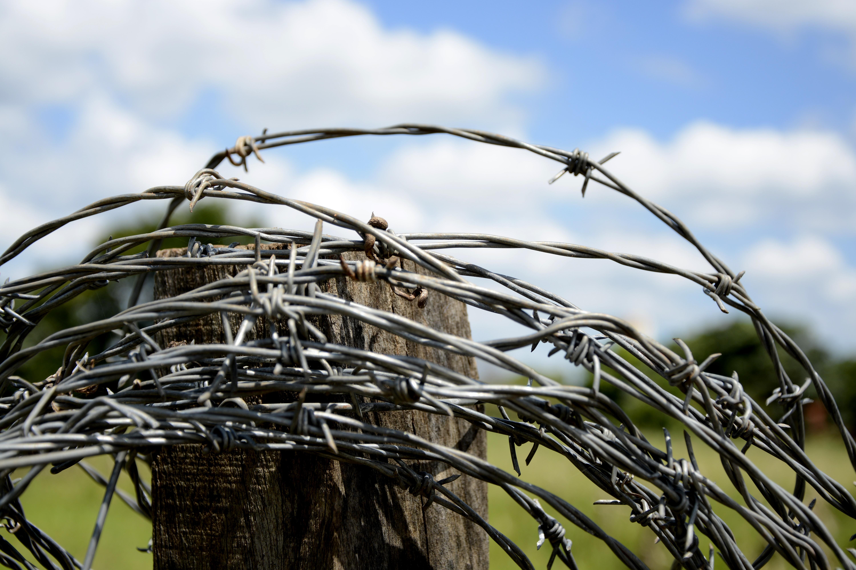 Kostenlose foto : Baum, Natur, Gras, Ast, Zaun, Stacheldraht, Holz ...