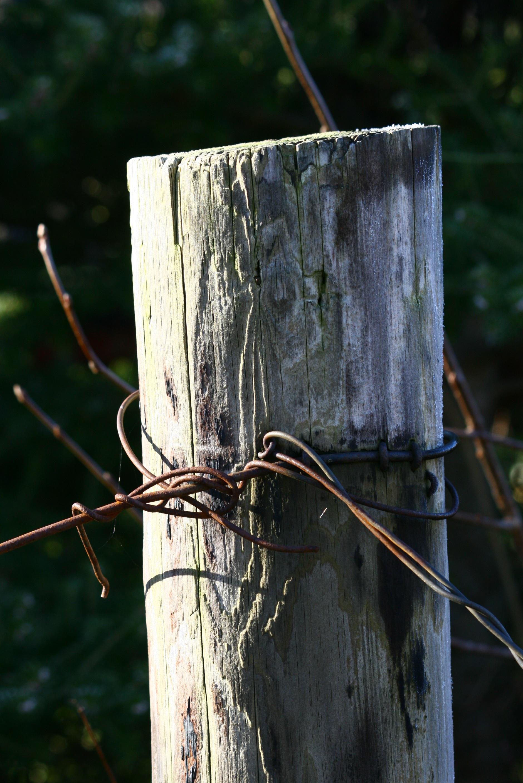 Kostenlose foto : Baum, Natur, Gras, Ast, Zaun, Holz, Blatt ...