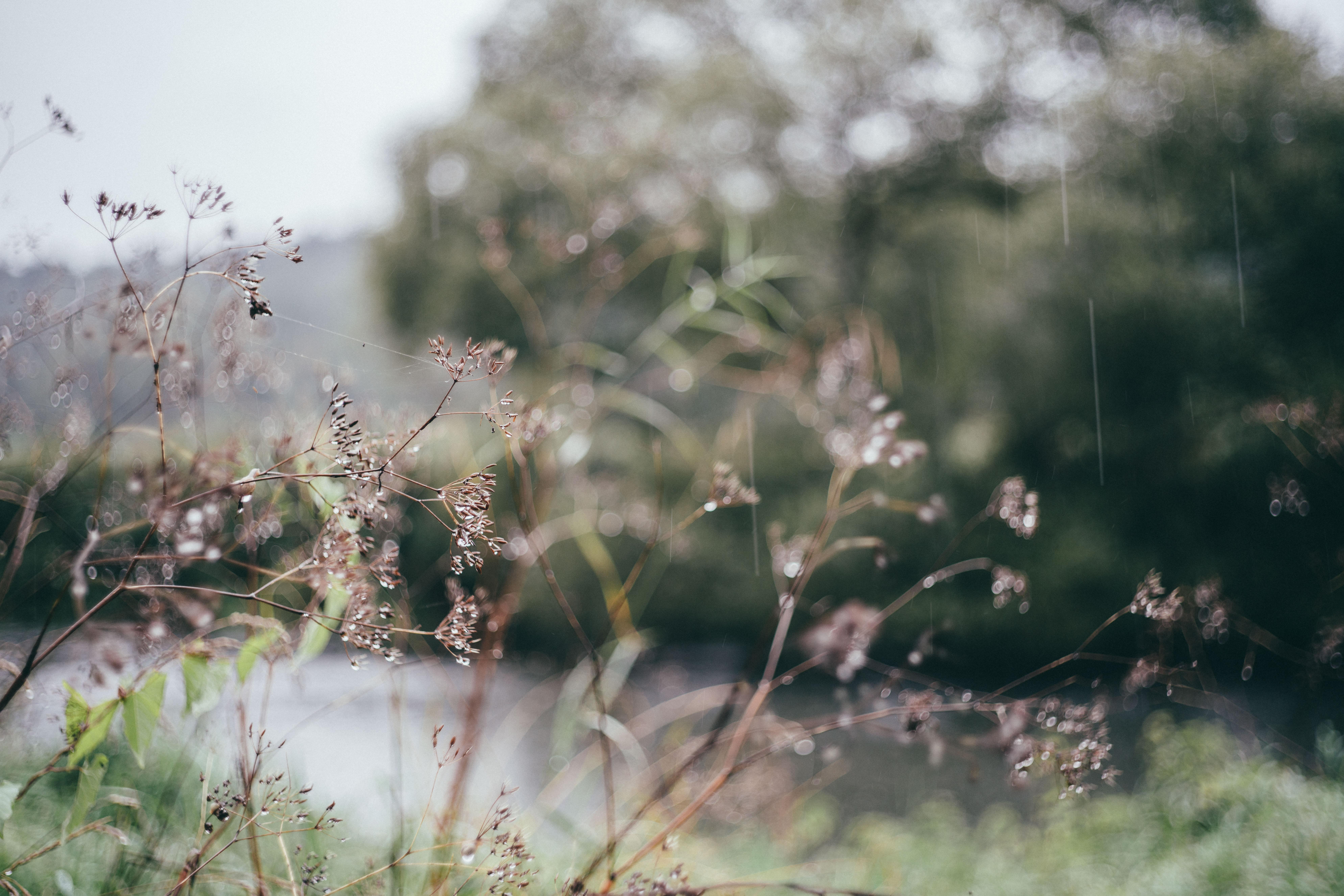 картинка летний дождь утро активно входит мода