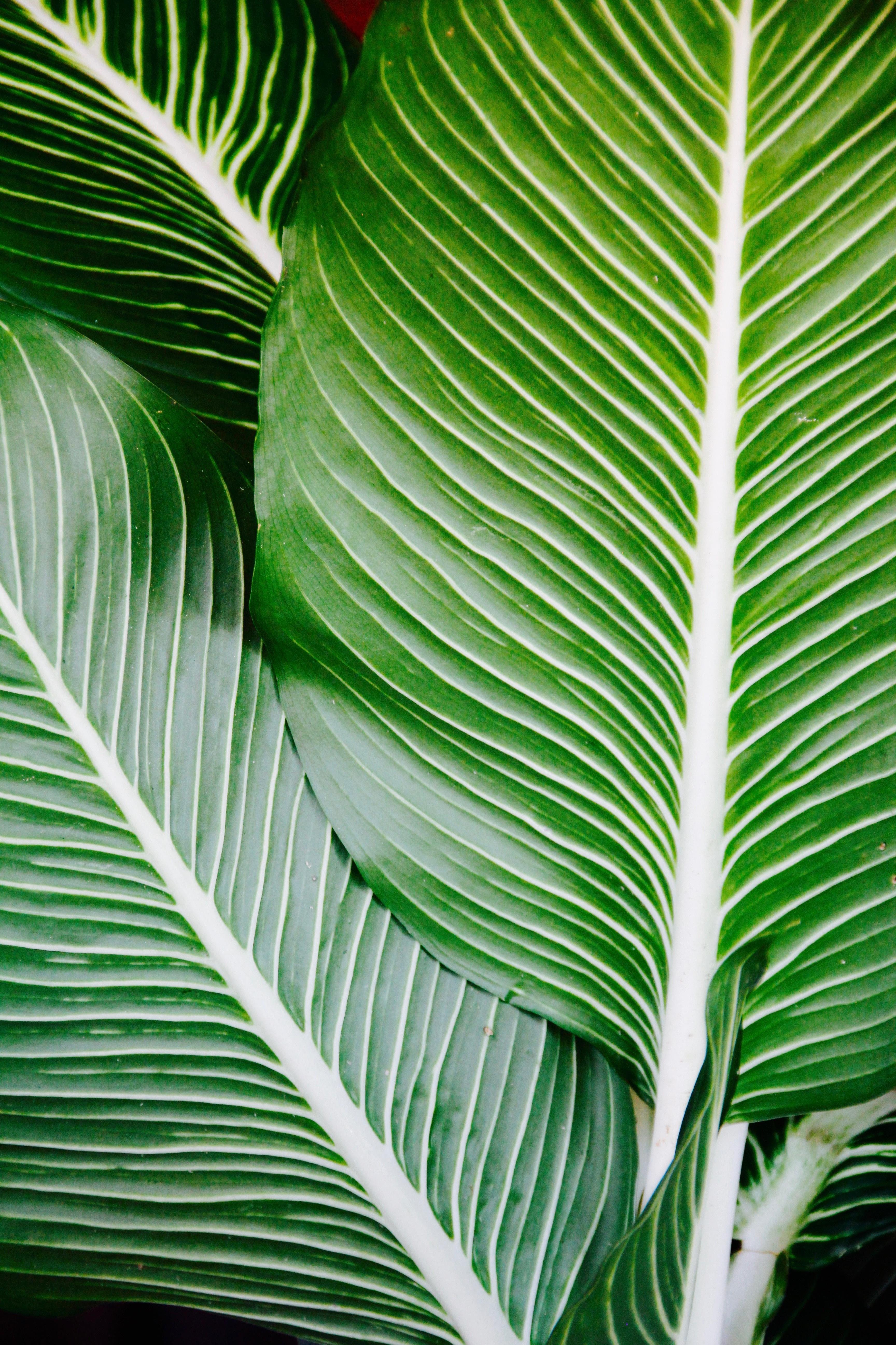 Цветок на стебле листья как у пальмы