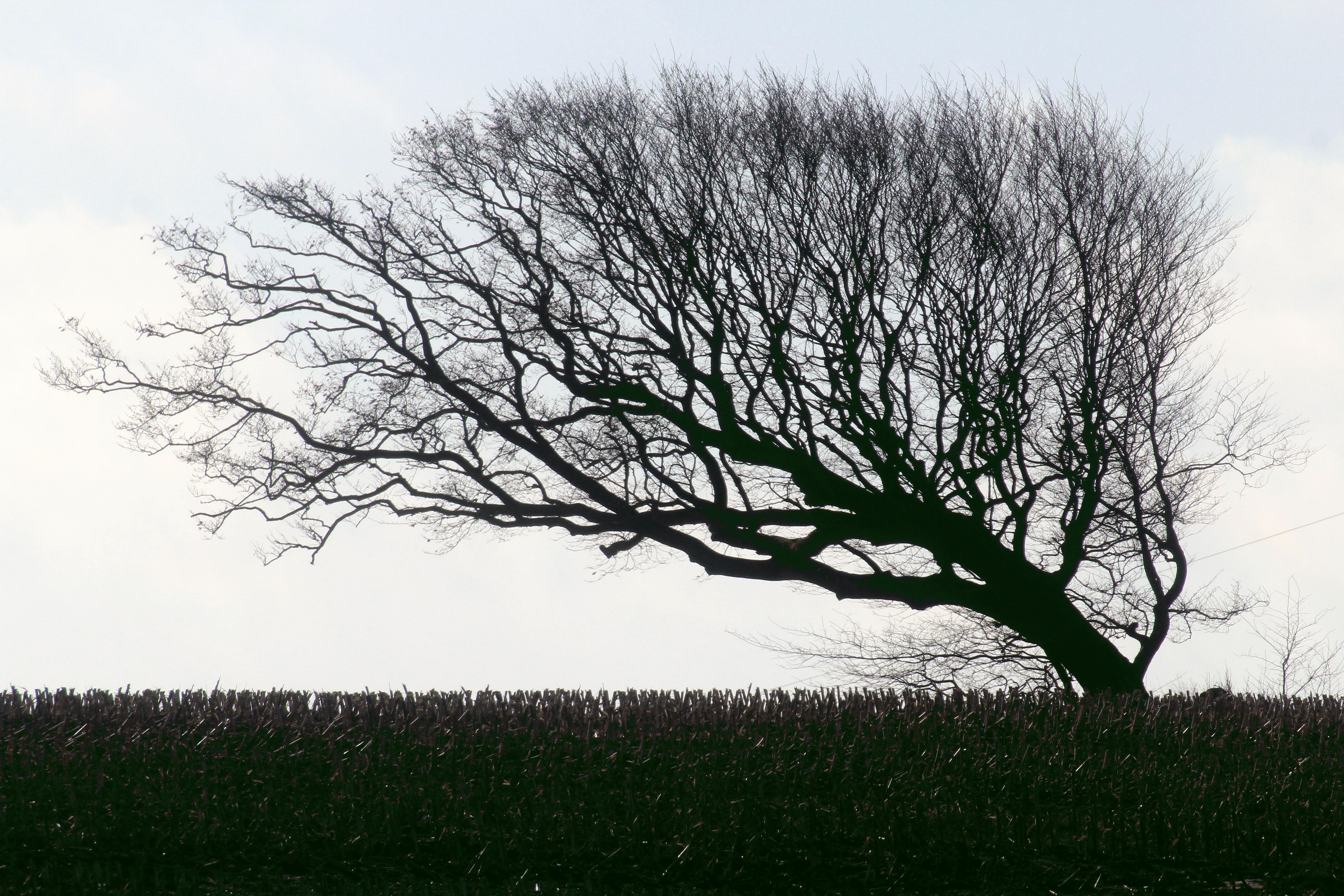 вырубку картинки как деревья гнет ветер заработать хотя еду