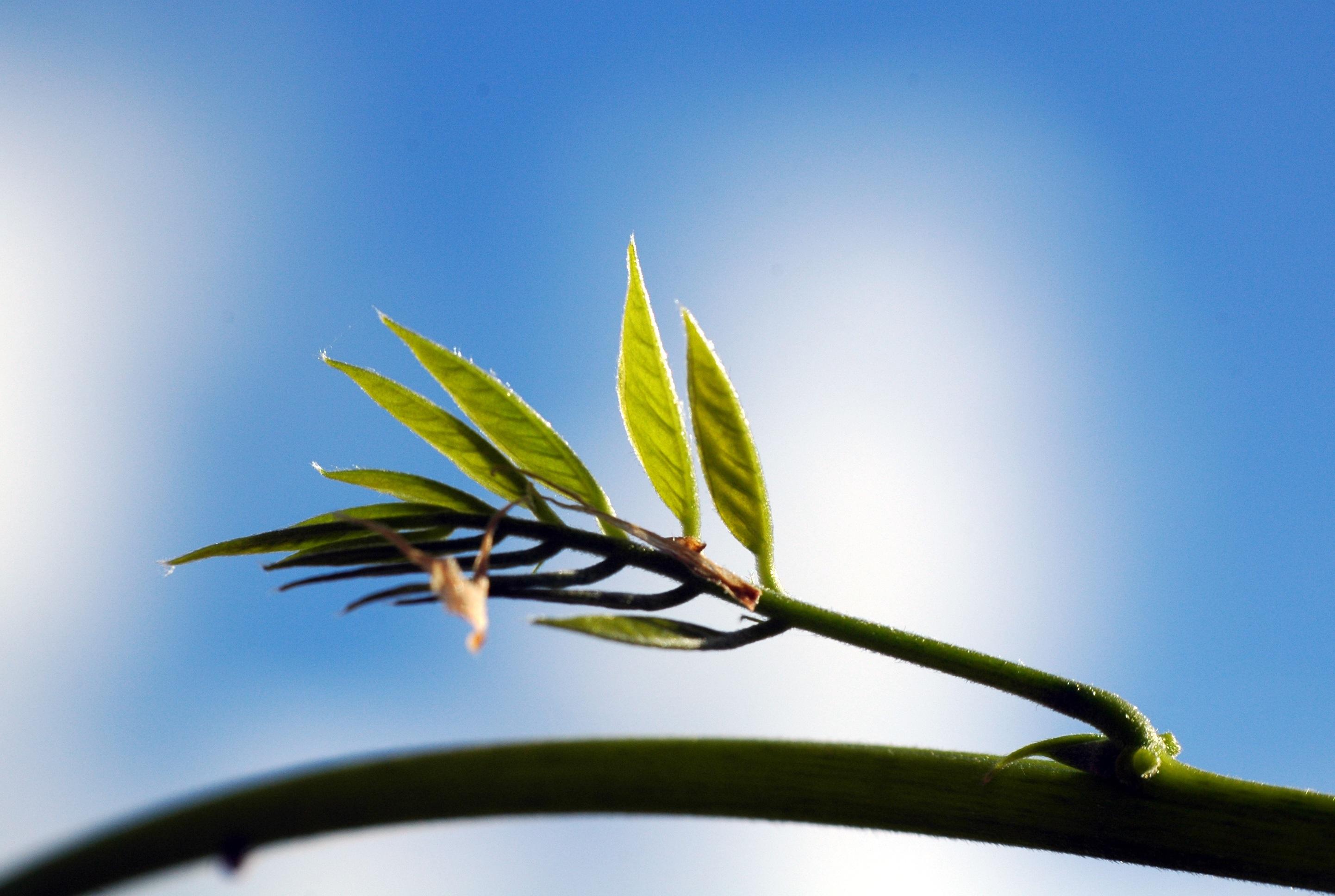 Fotoğraf Ağaç Doğa çimen şube Gökyüzü Fotoğrafçılık Güneş