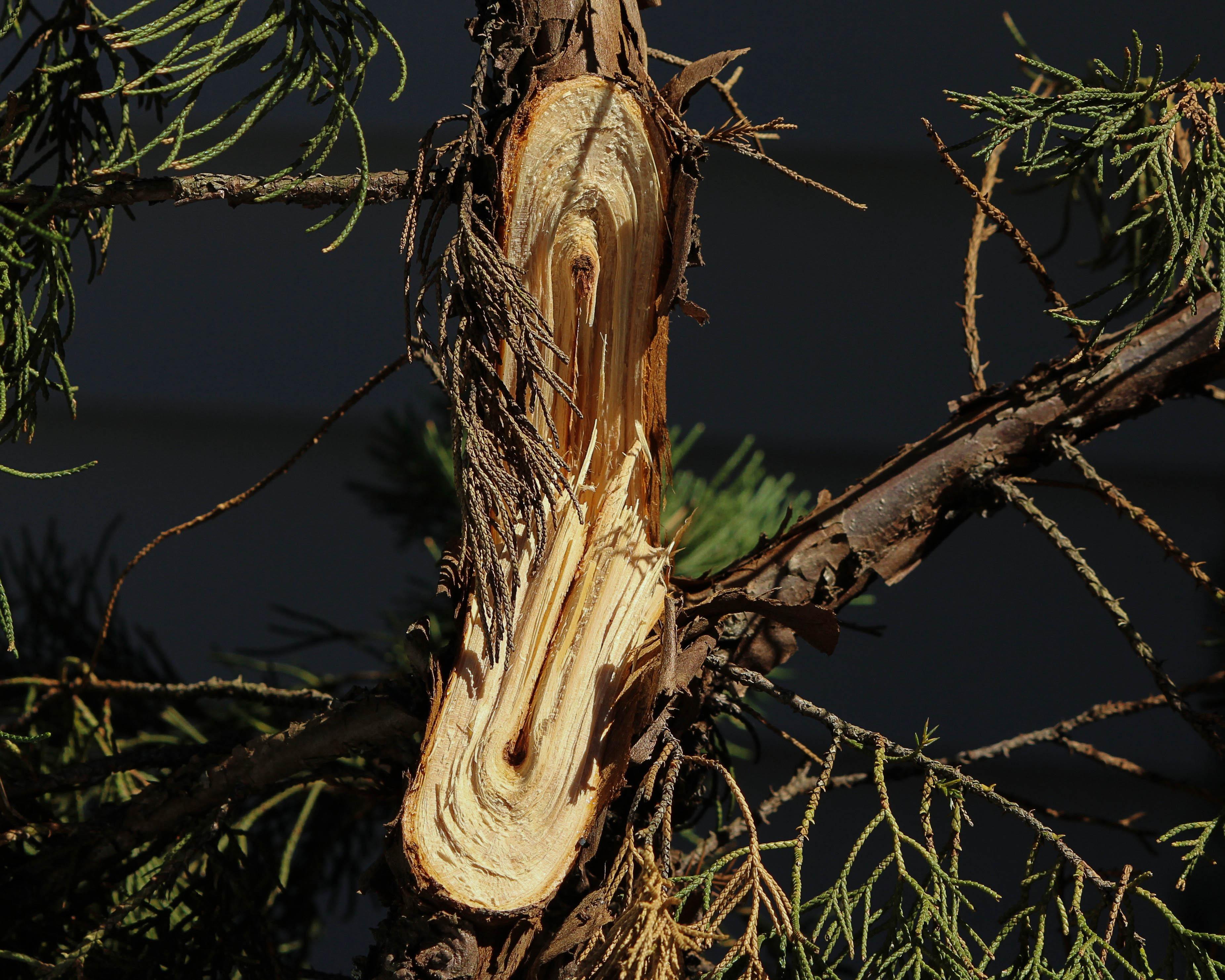 Kostenlose foto baum natur gras ast holz blatt - Peut on couper des branches du voisin ...