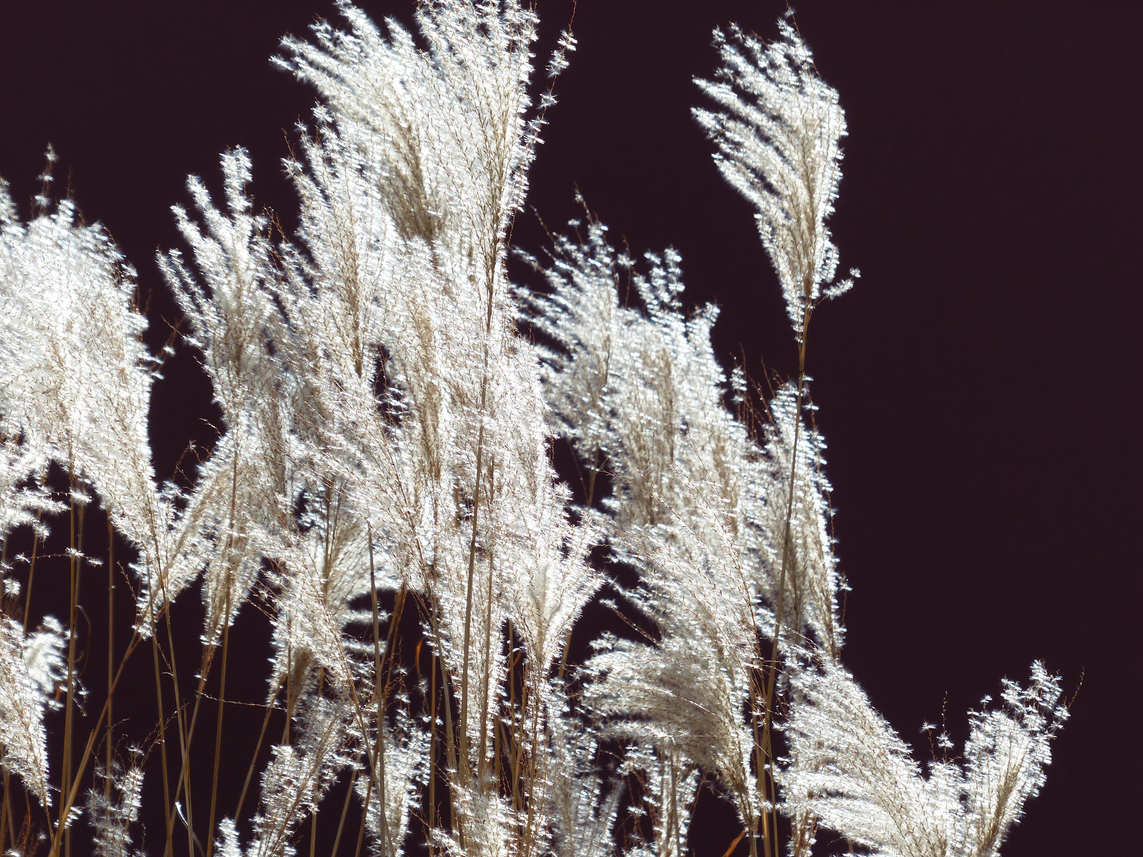 images gratuites arbre la nature herbe branche neige hiver plante feuille fleur gel. Black Bedroom Furniture Sets. Home Design Ideas