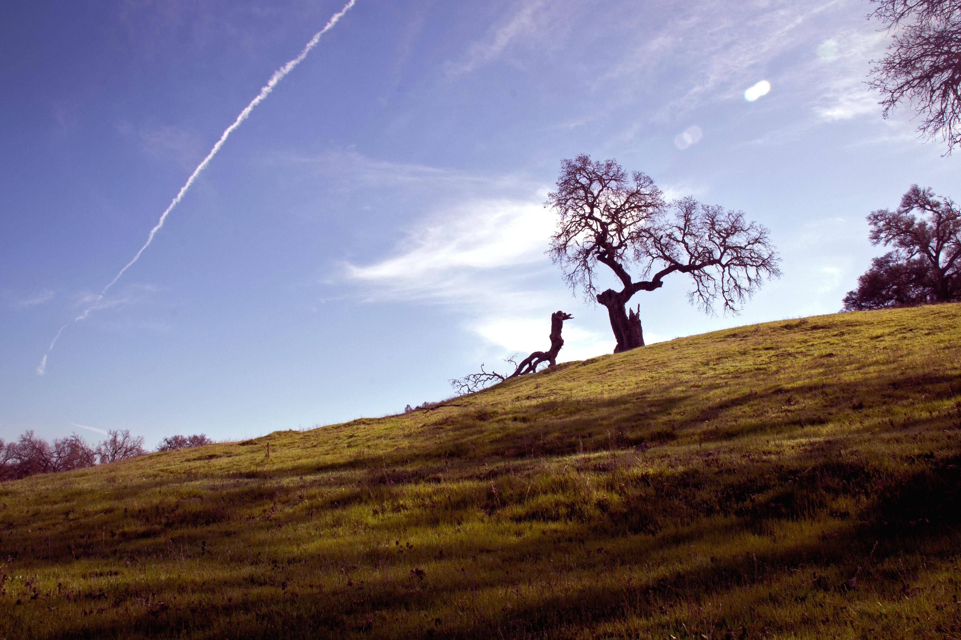 картинки дерево на холме дипломе актера