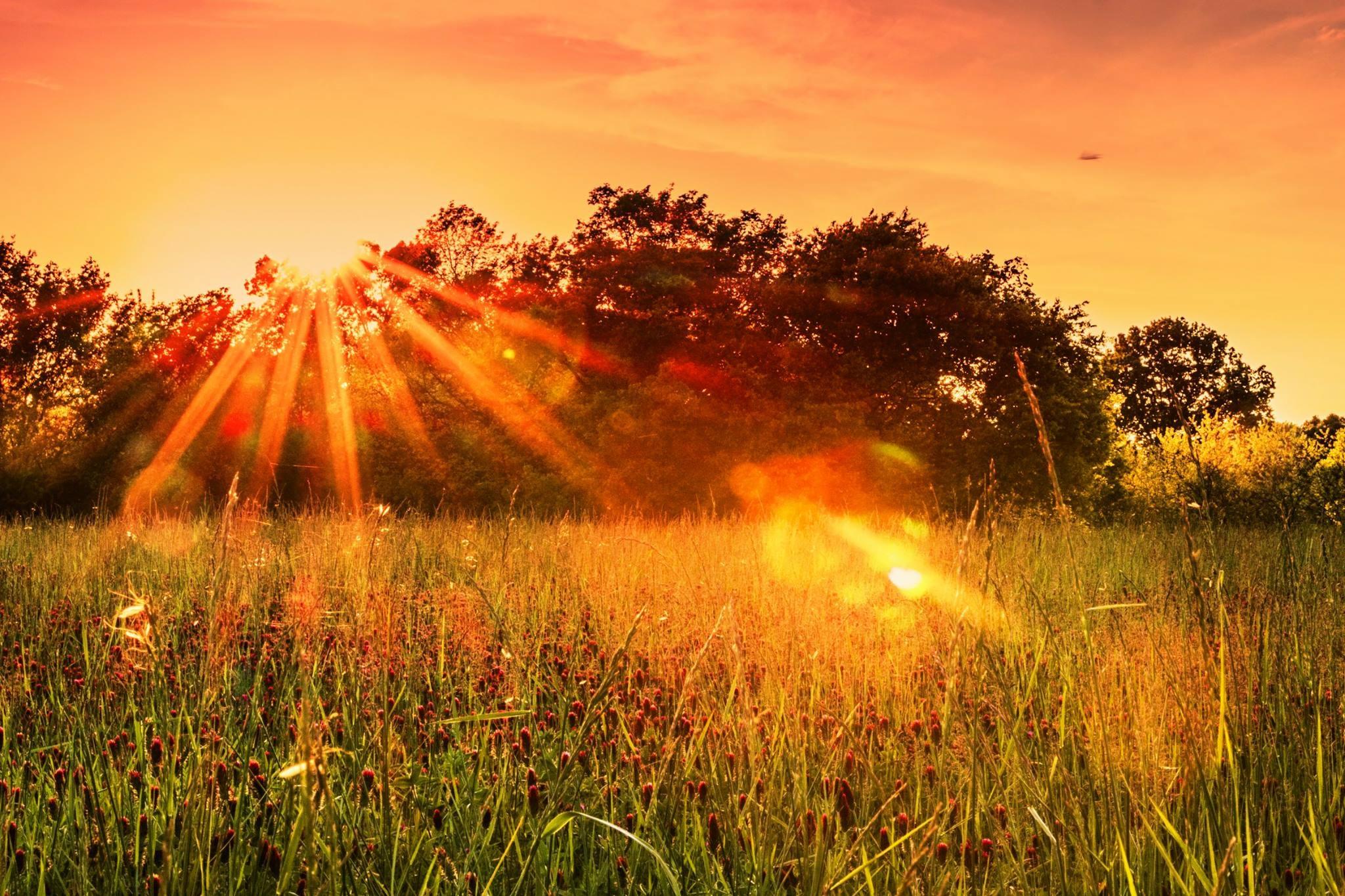 попади картинки восходящее солнце с лучами списке