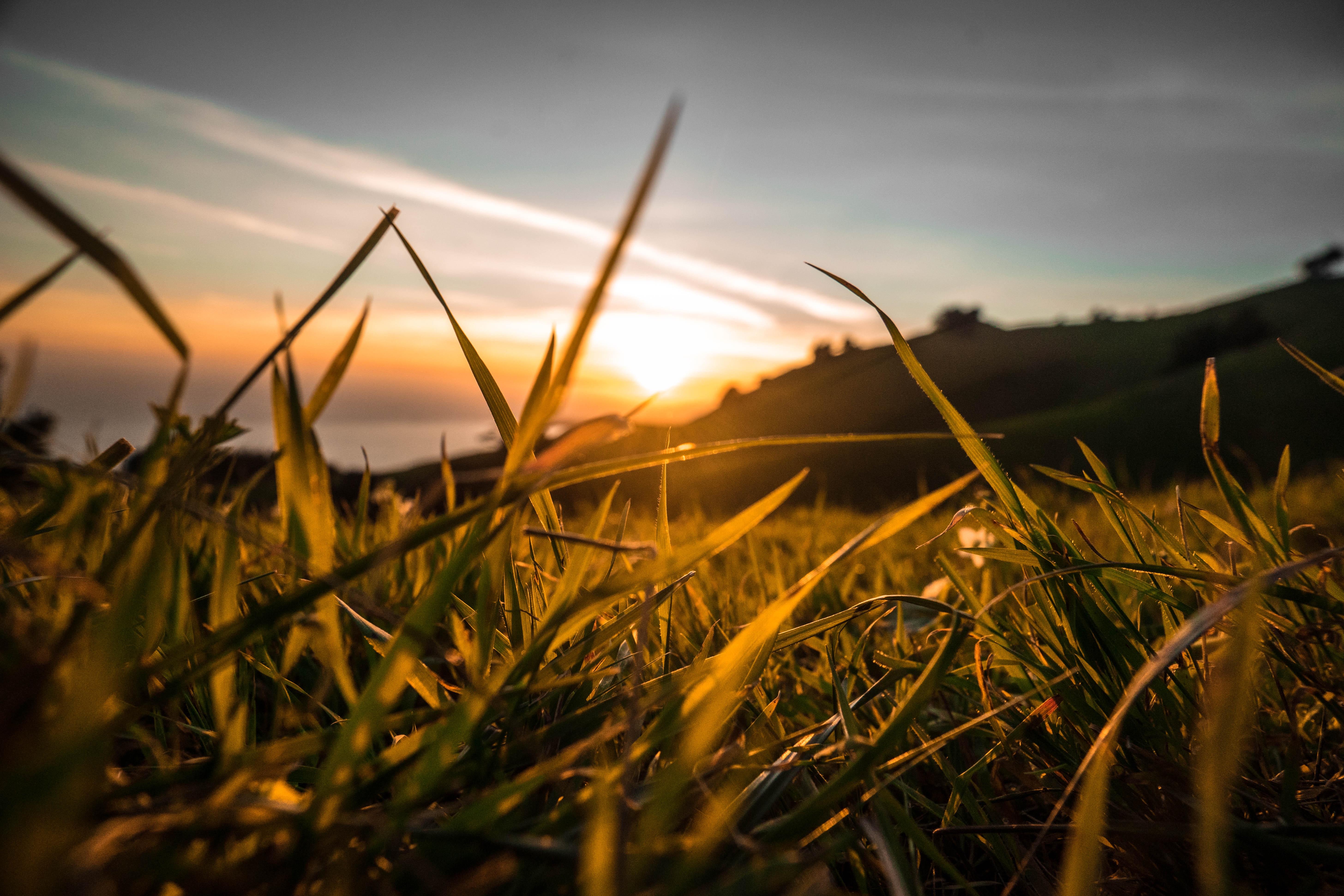 выбор картинки закат и трава улицы