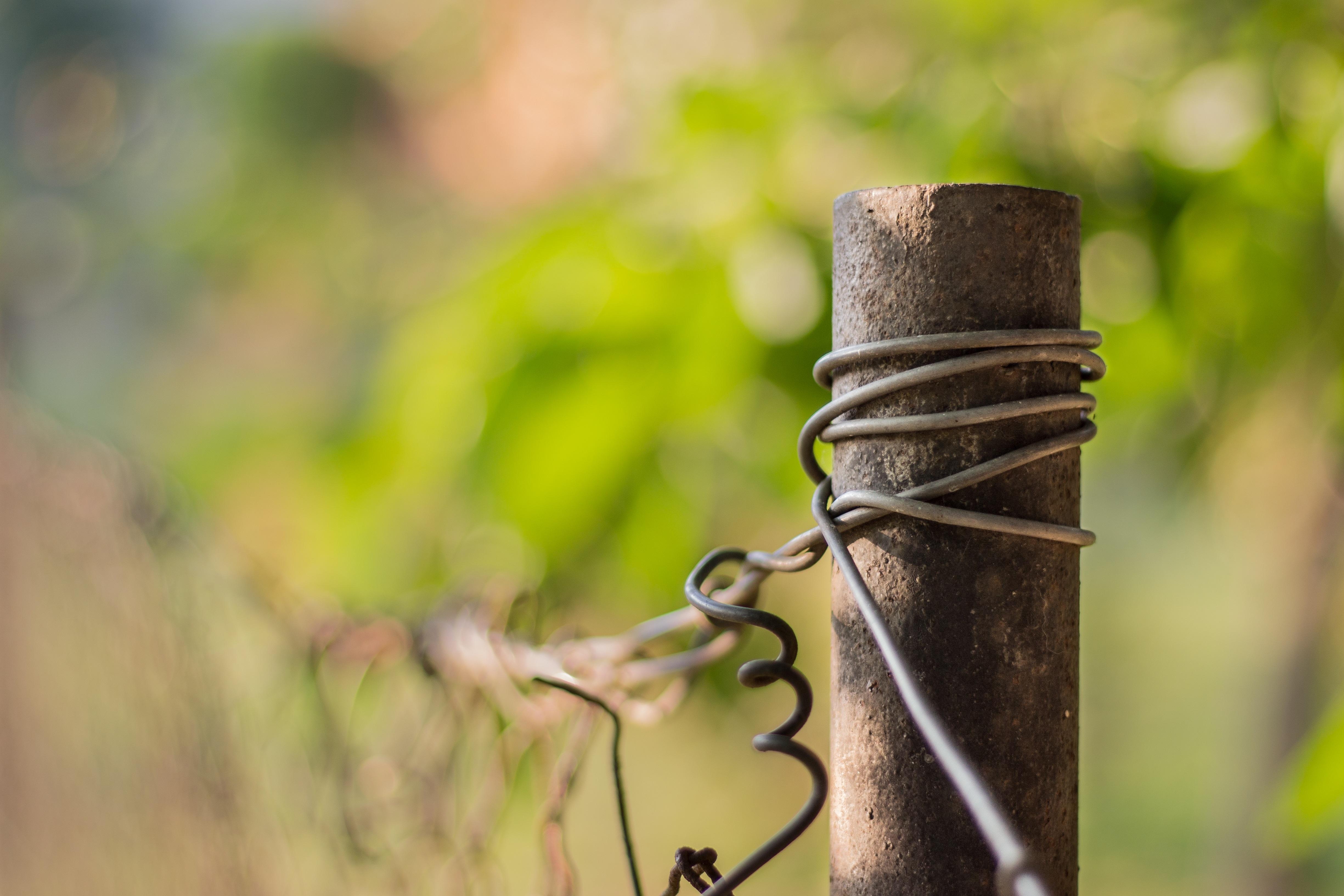 Kostenlose foto : Baum, Natur, Gras, draussen, Ast, Zaun, die ...