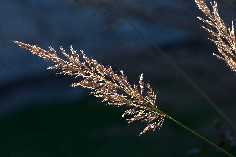 Kostenlose foto Baum Natur Gras draussen Ast Winter Pflanze Fotografie Sonnenlicht Blatt Blume Frost trocken Herbst blau Gelb Flora