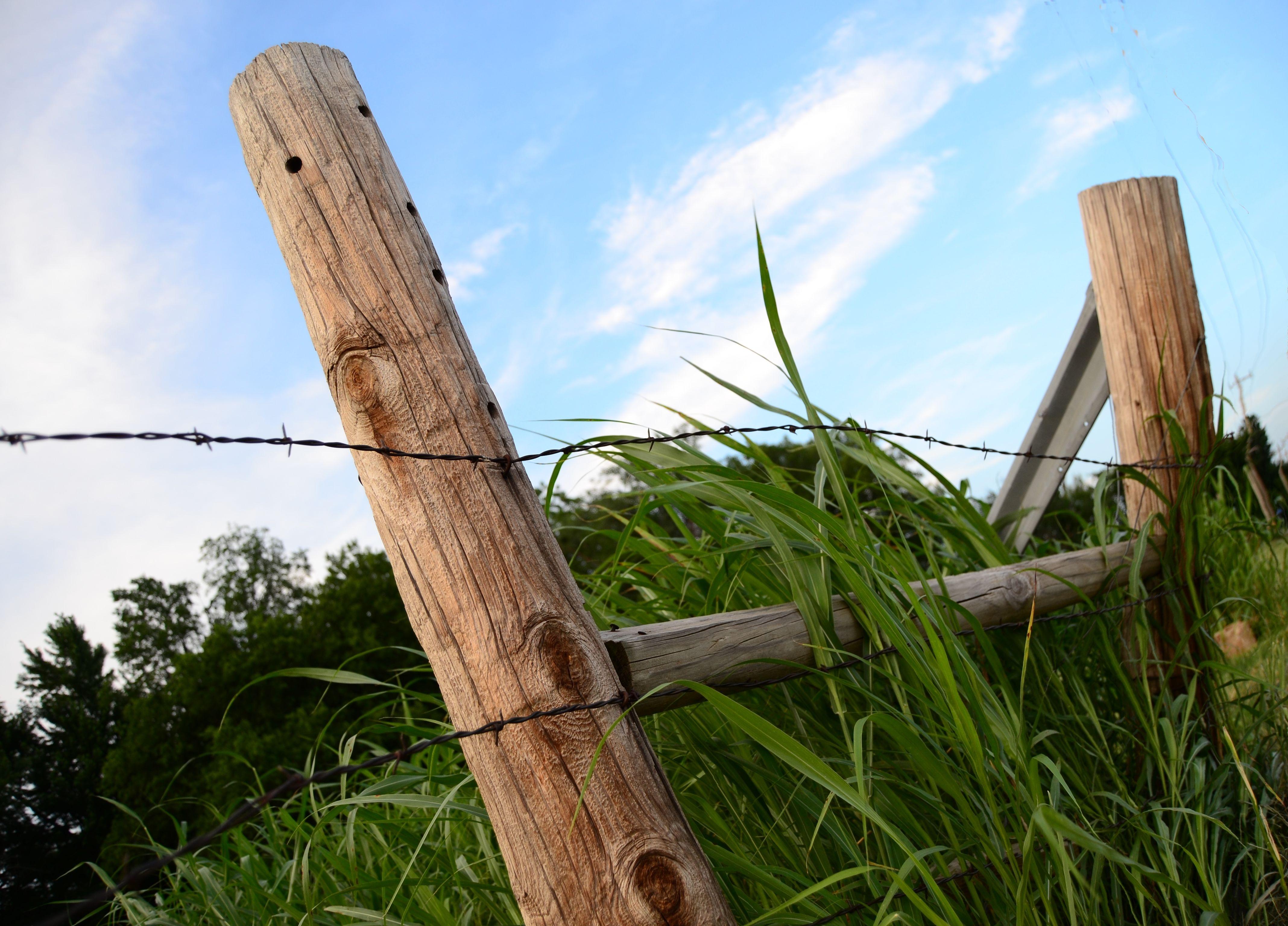 Kostenlose foto Baum Natur Gras draussen Zaun Post Pflanze